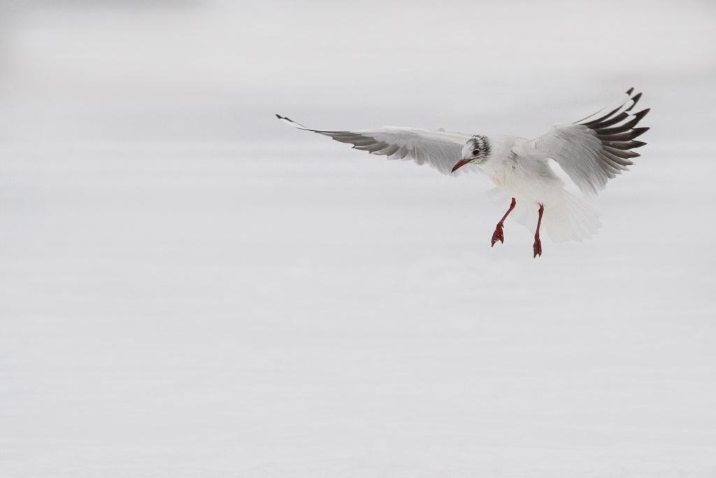 ready to land by David Philipp
