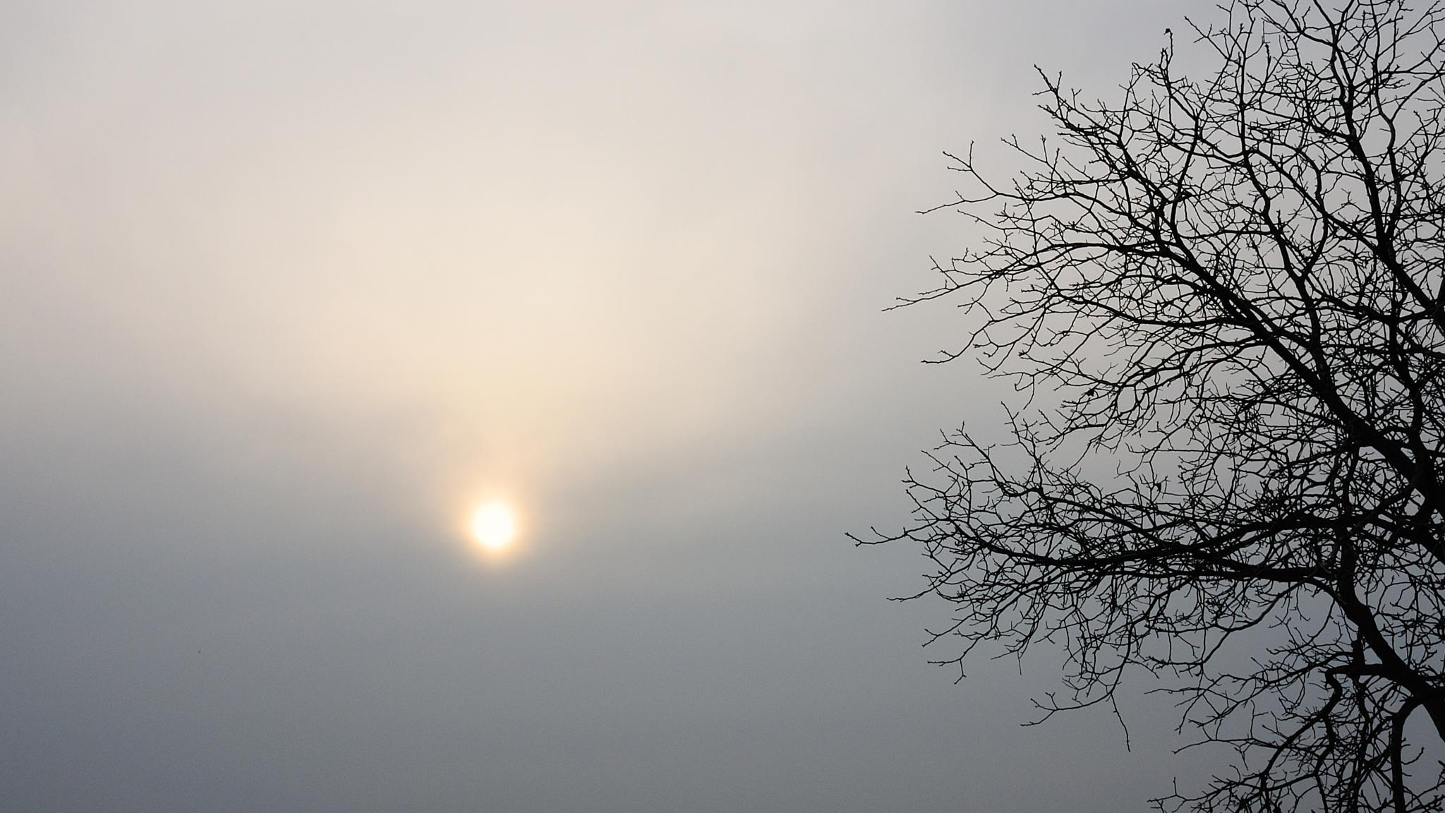 Photo in Fine Art #nikon #nikon 1 #nikon 1 v1 #nikon one #tree #sun #fog #youpic photography #youpic #photography #vadim beldy