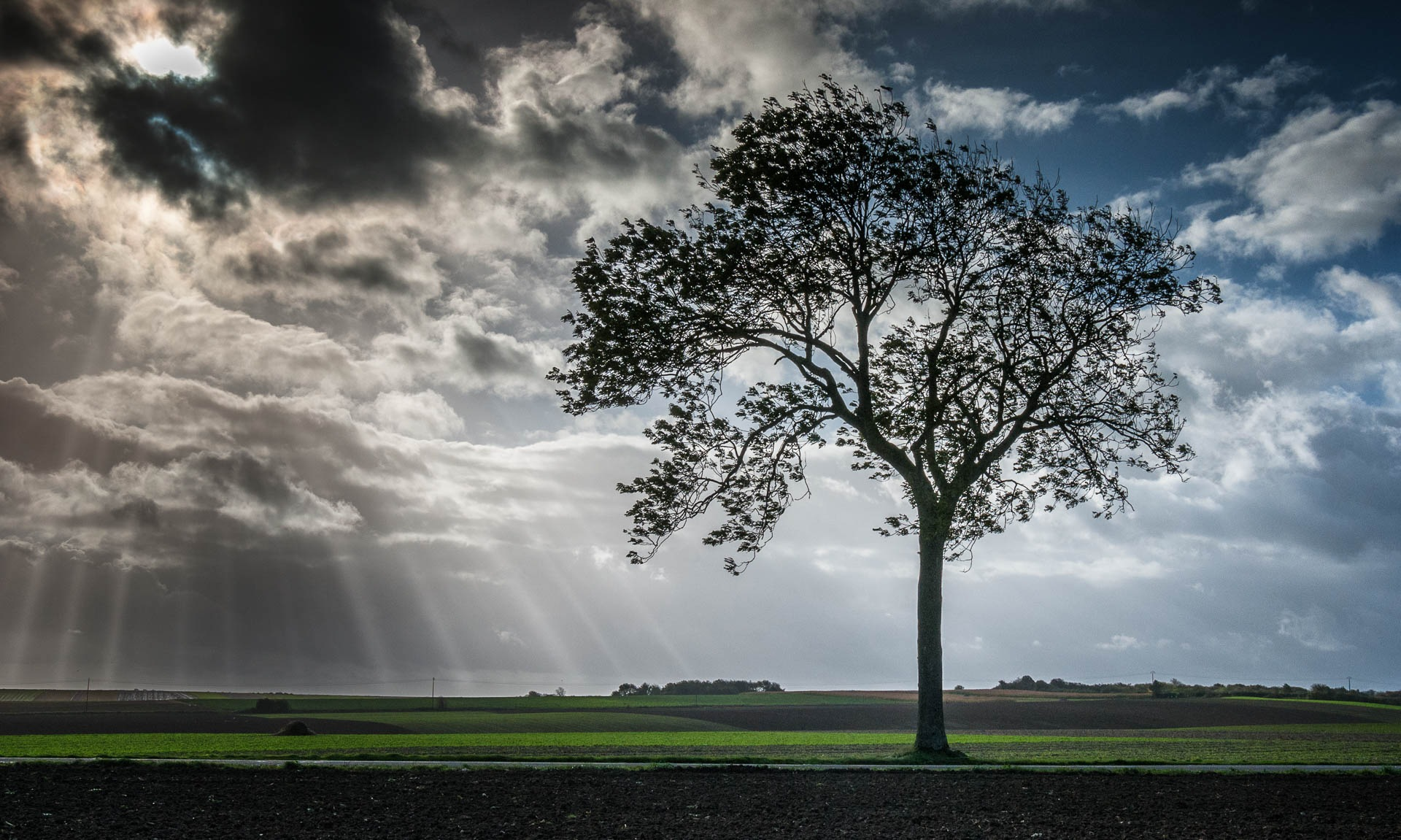 Lone Tree by Clive Martin