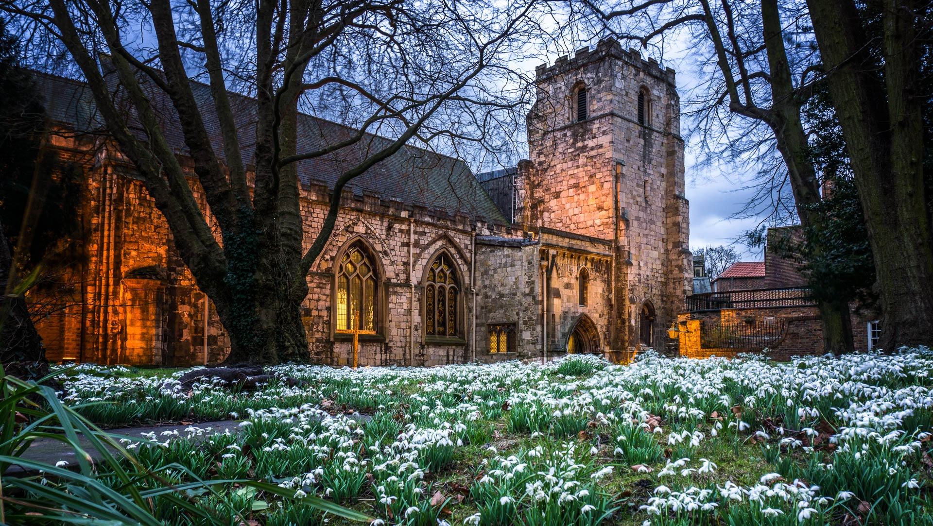 Snowdrops At The Rectory by Clive Martin
