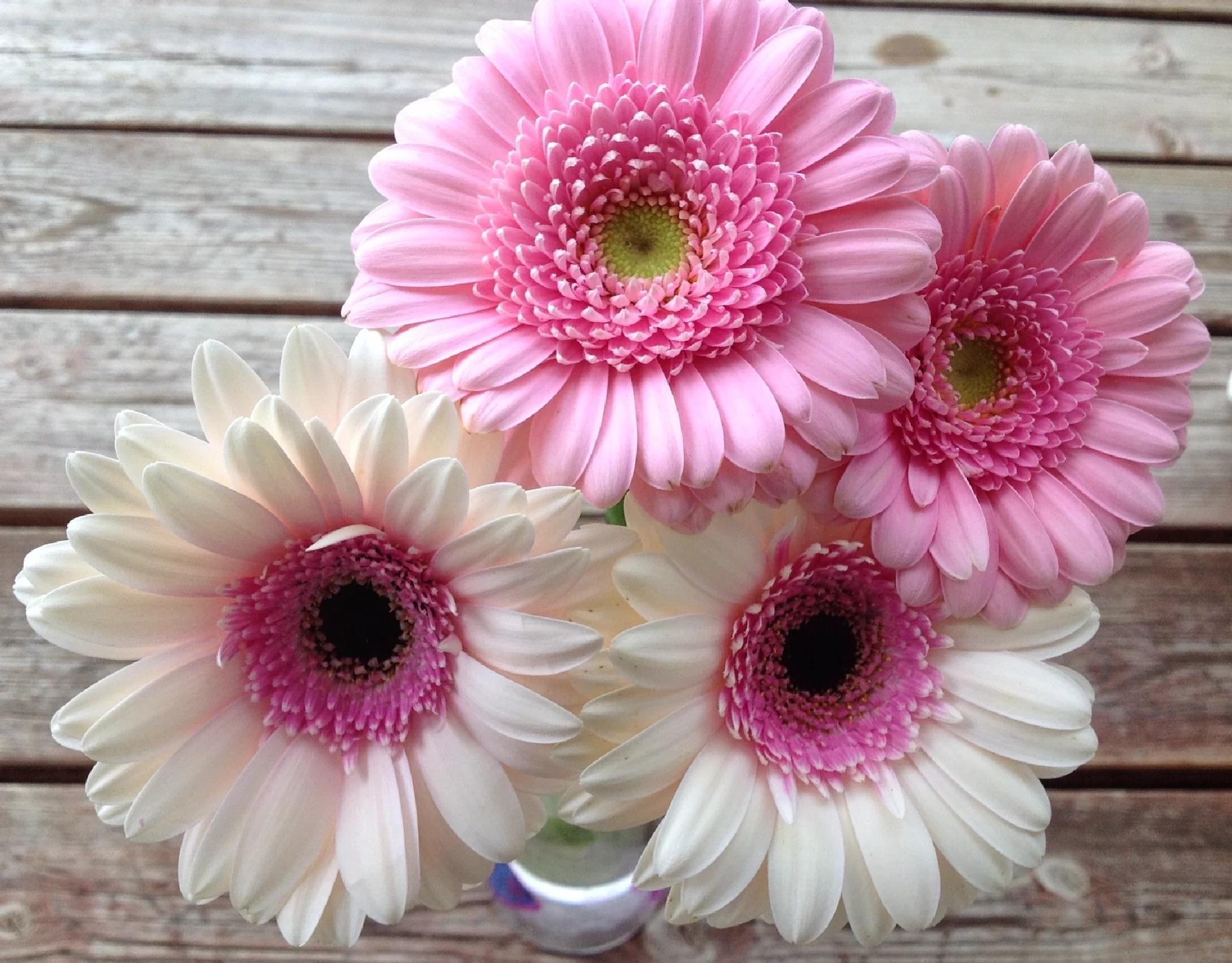 WHITE & PINK by lindaj.photogallery
