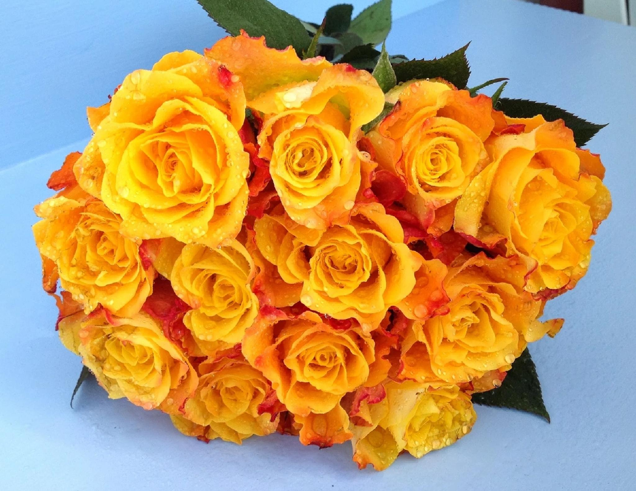 YELLOW ROSES by lindaj.photogallery