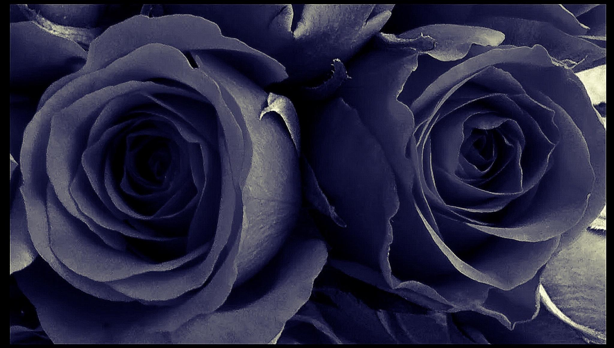 ROSES by lindaj.photogallery
