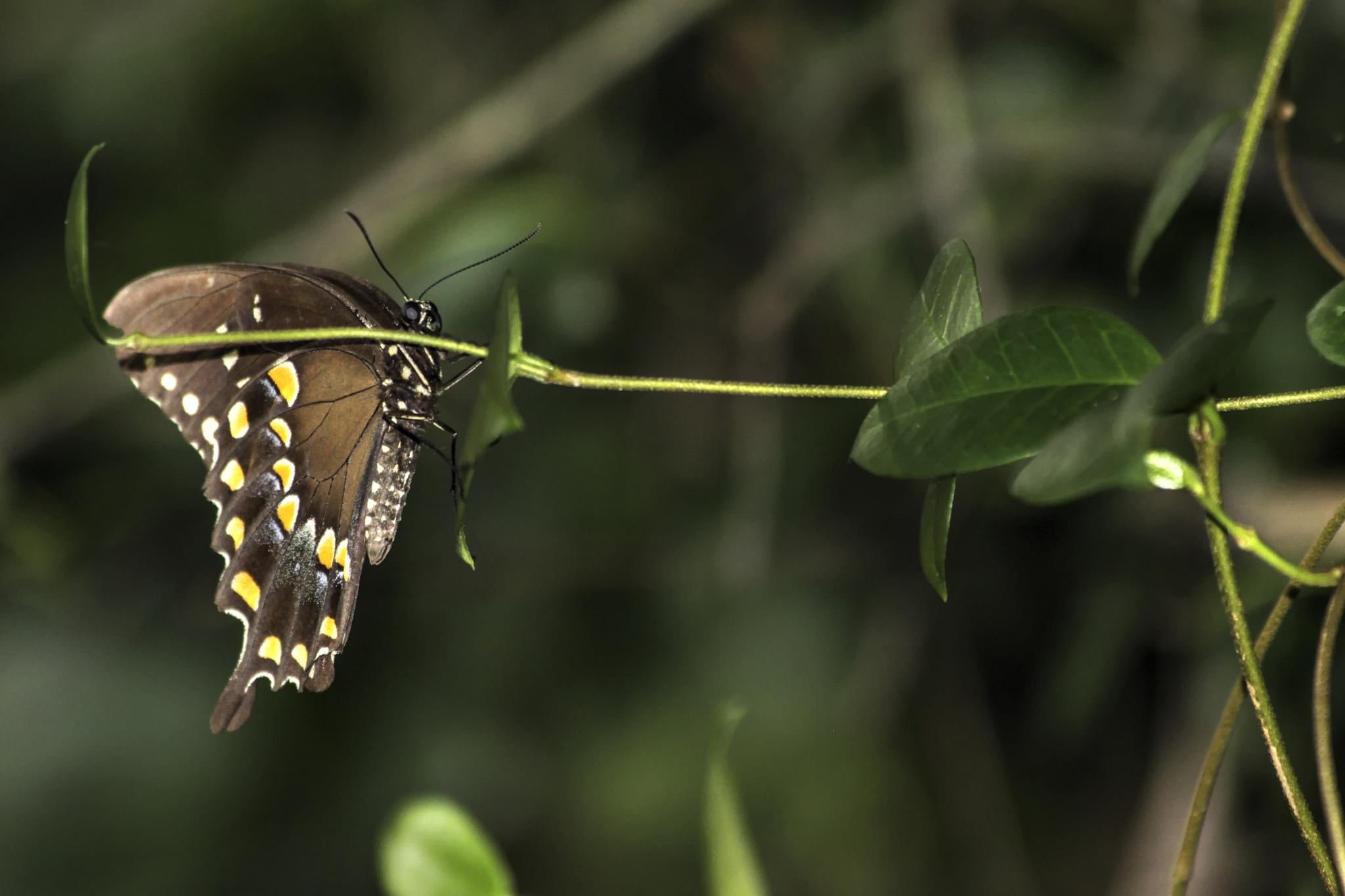 butterfly by Melanie Smith