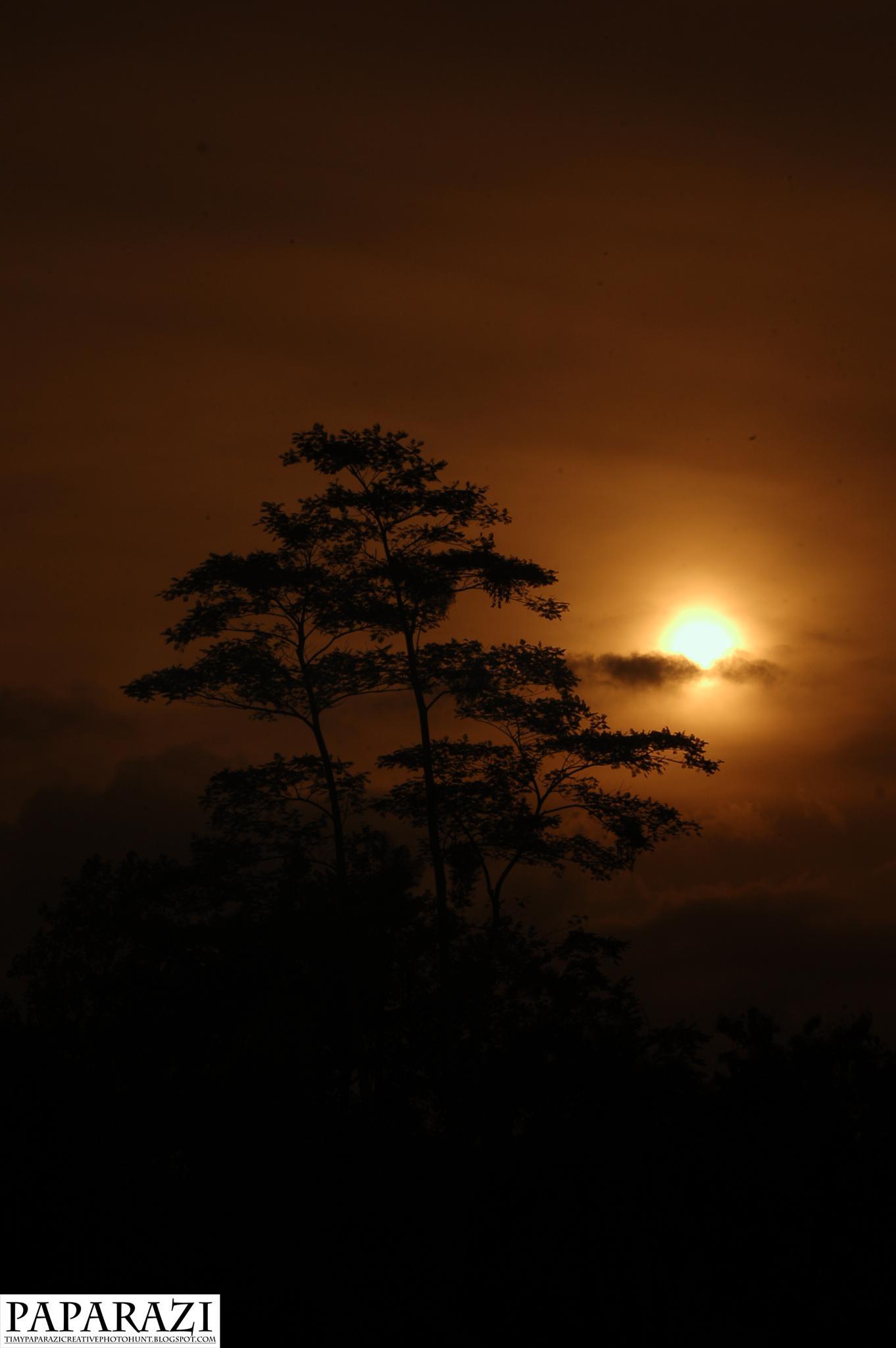 Photo in Landscape #sunset #nikon d50 #sky #tree #timypaparazi