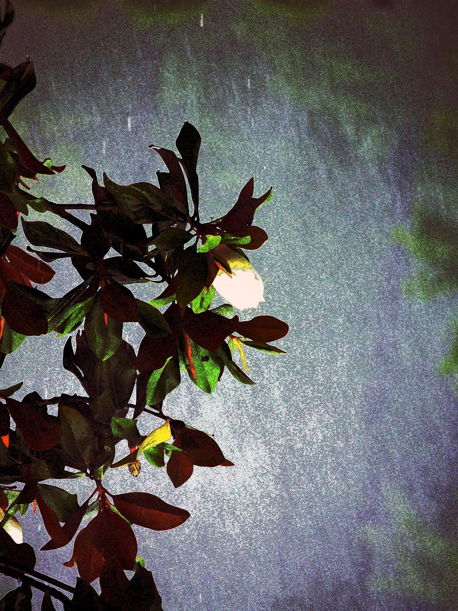 night flower  by Mario Muyet