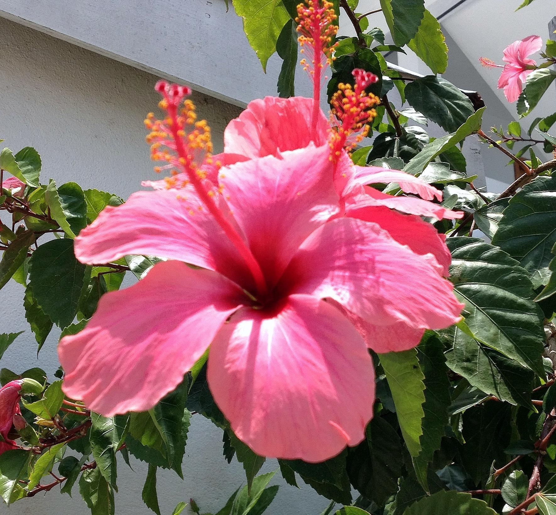flower by sandilands55
