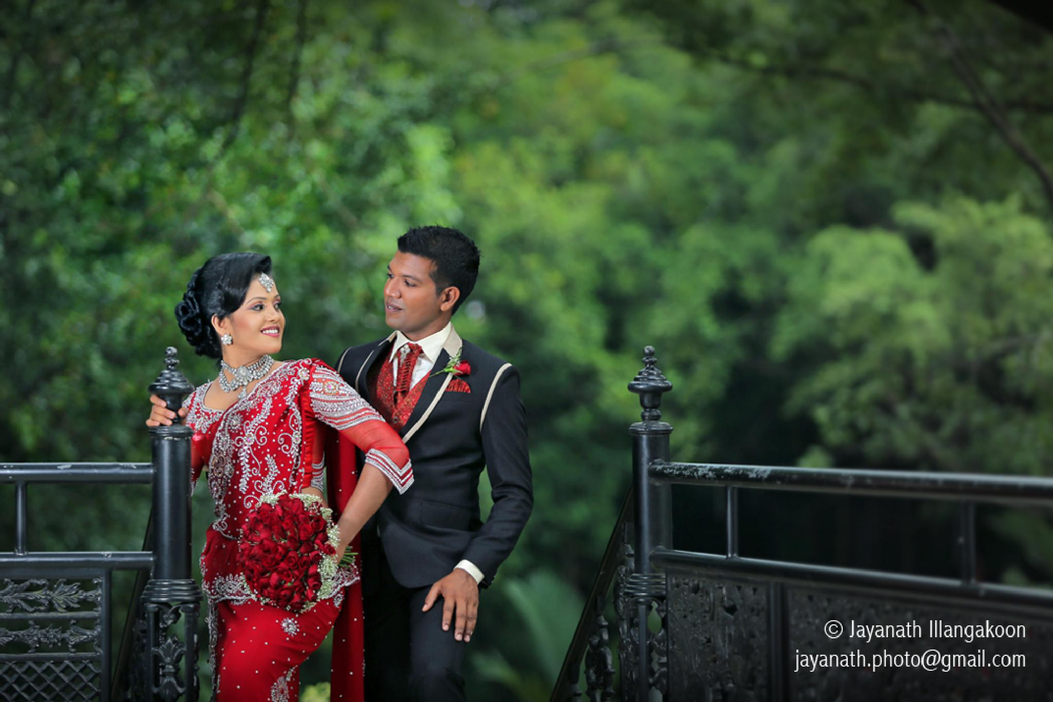 Homecoming  by Jayanath Illangakoon