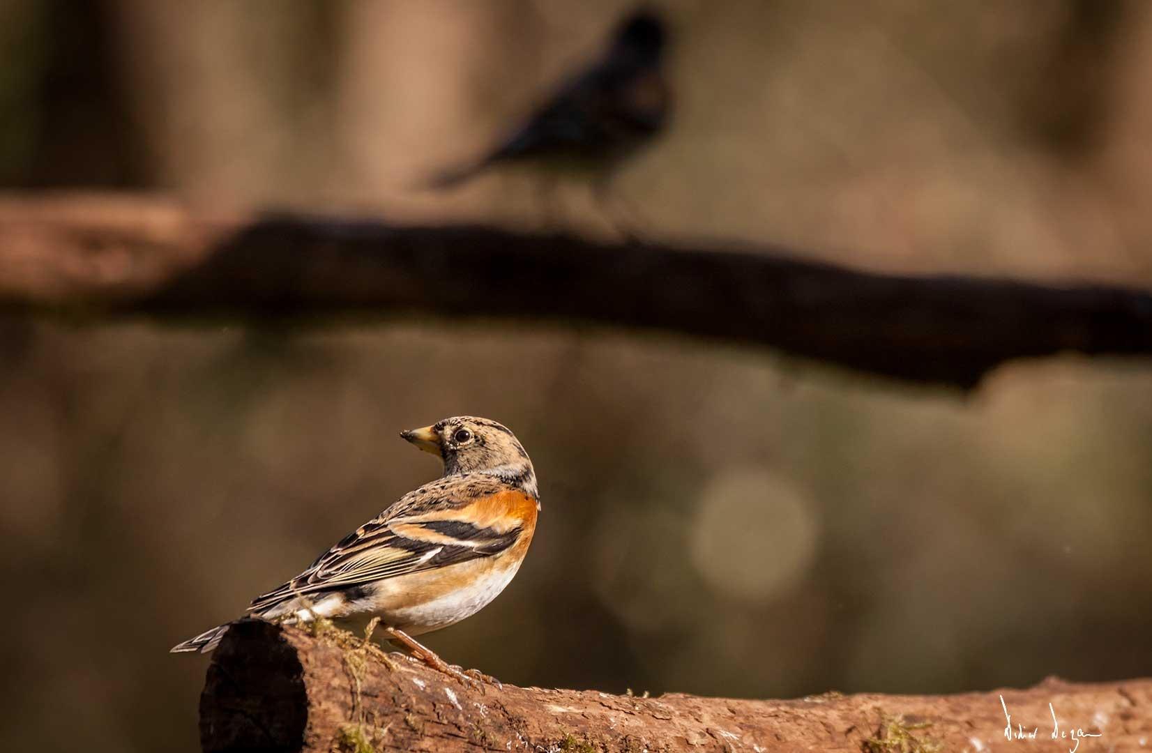 Little bird..... by DidierDEZAN