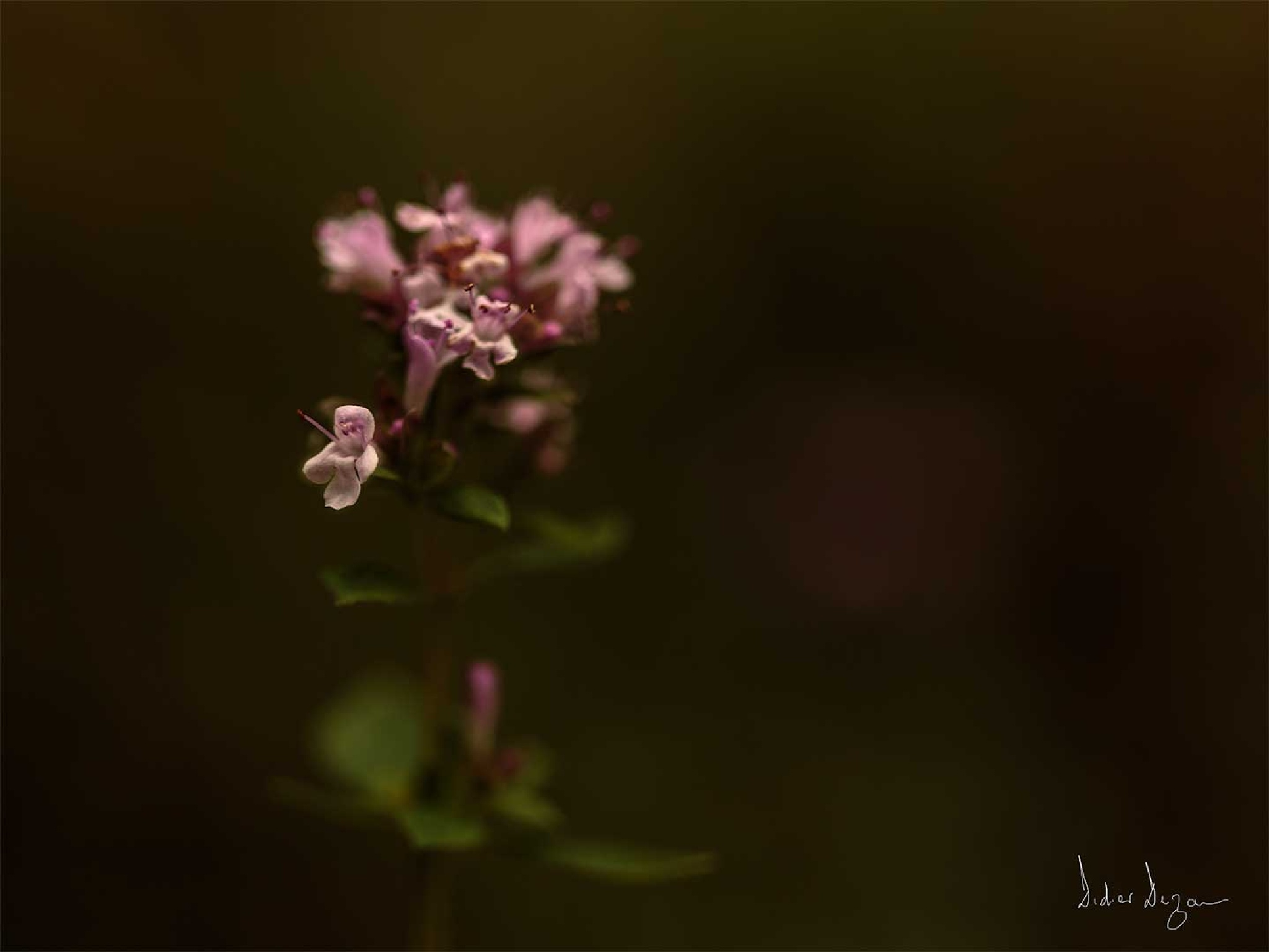A Flower..... by DidierDEZAN
