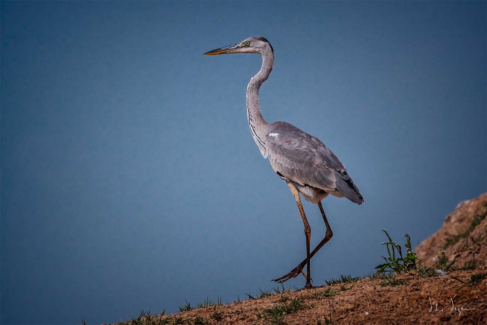 Bird  by DidierDEZAN