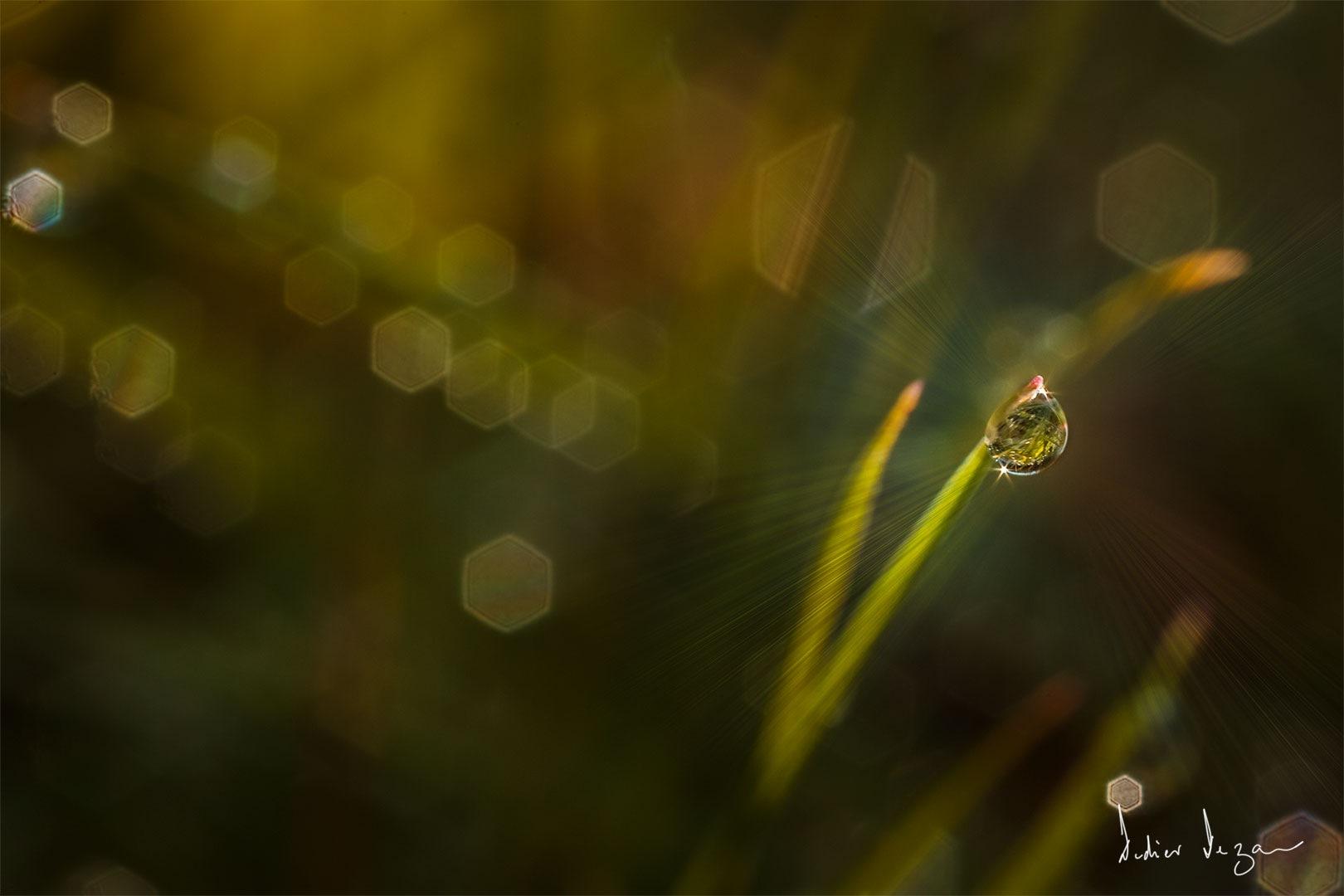 Droplet ..... by DidierDEZAN