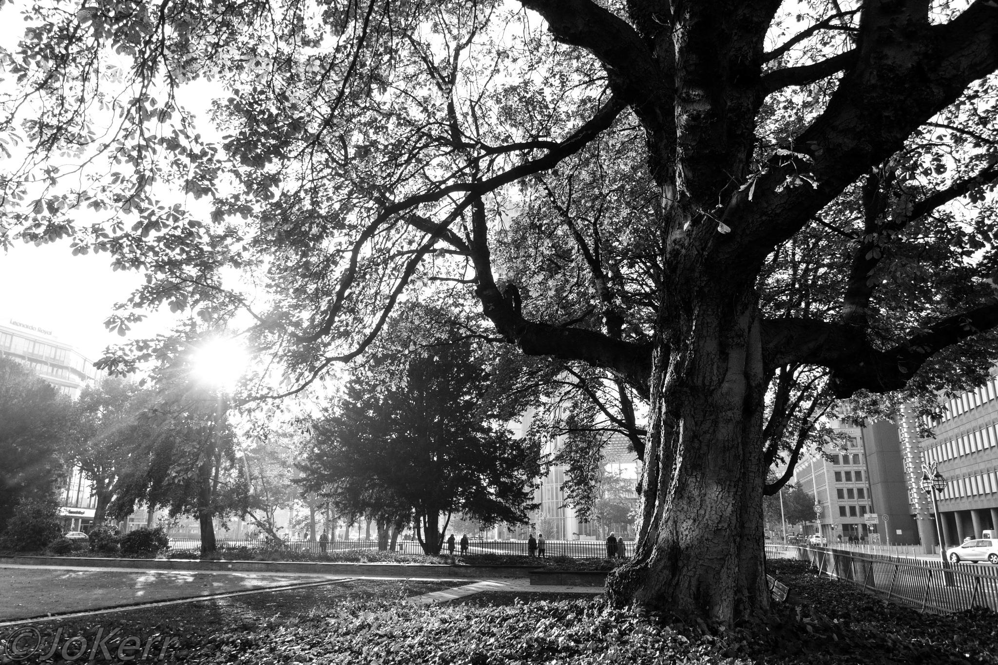 Old Tree by Jo Kerr