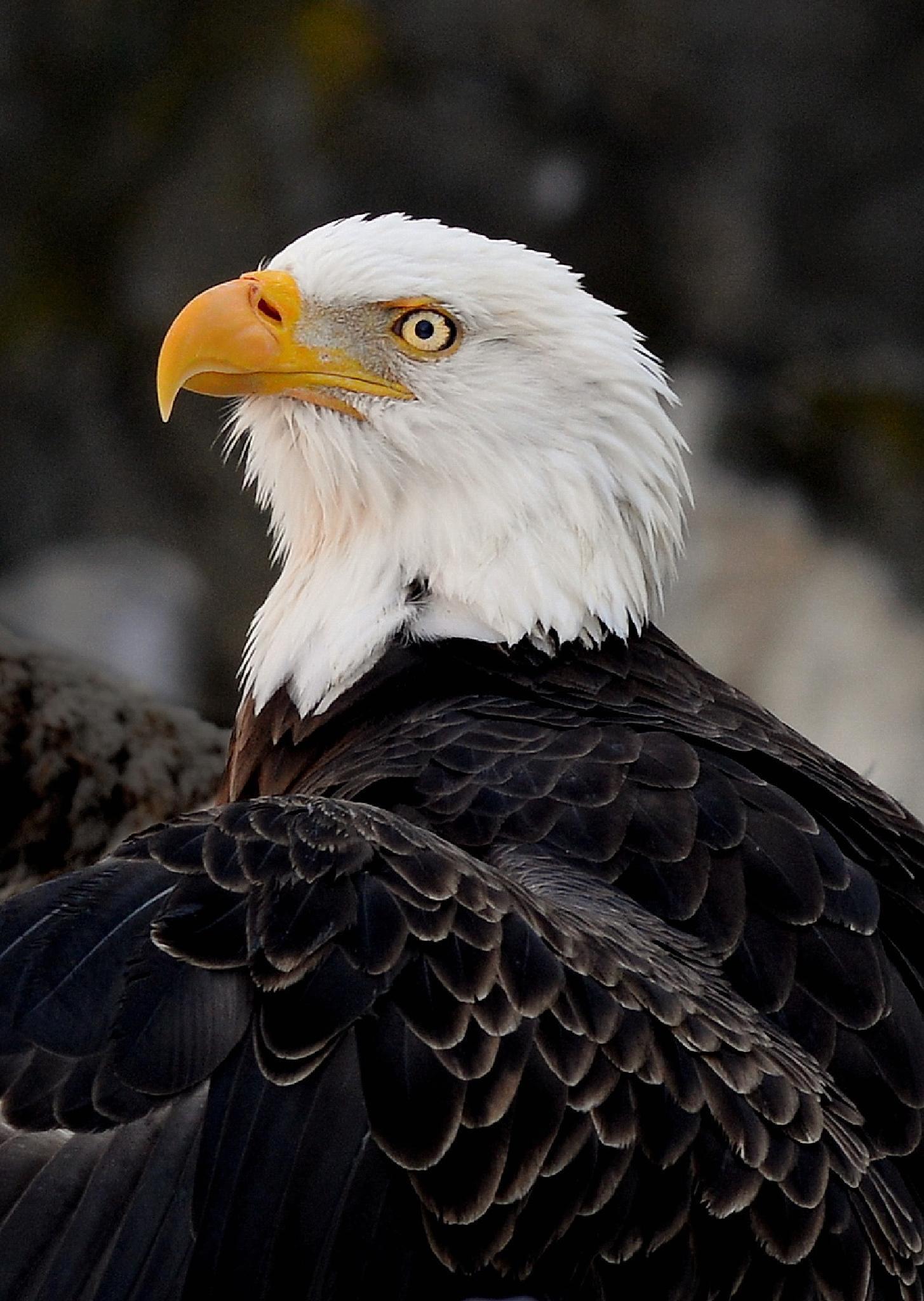 eagle eye by Jeff Fox