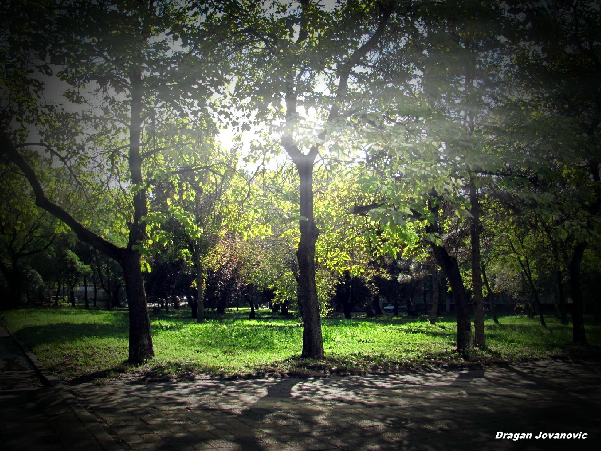 MORNING IN PARK by espanol1950