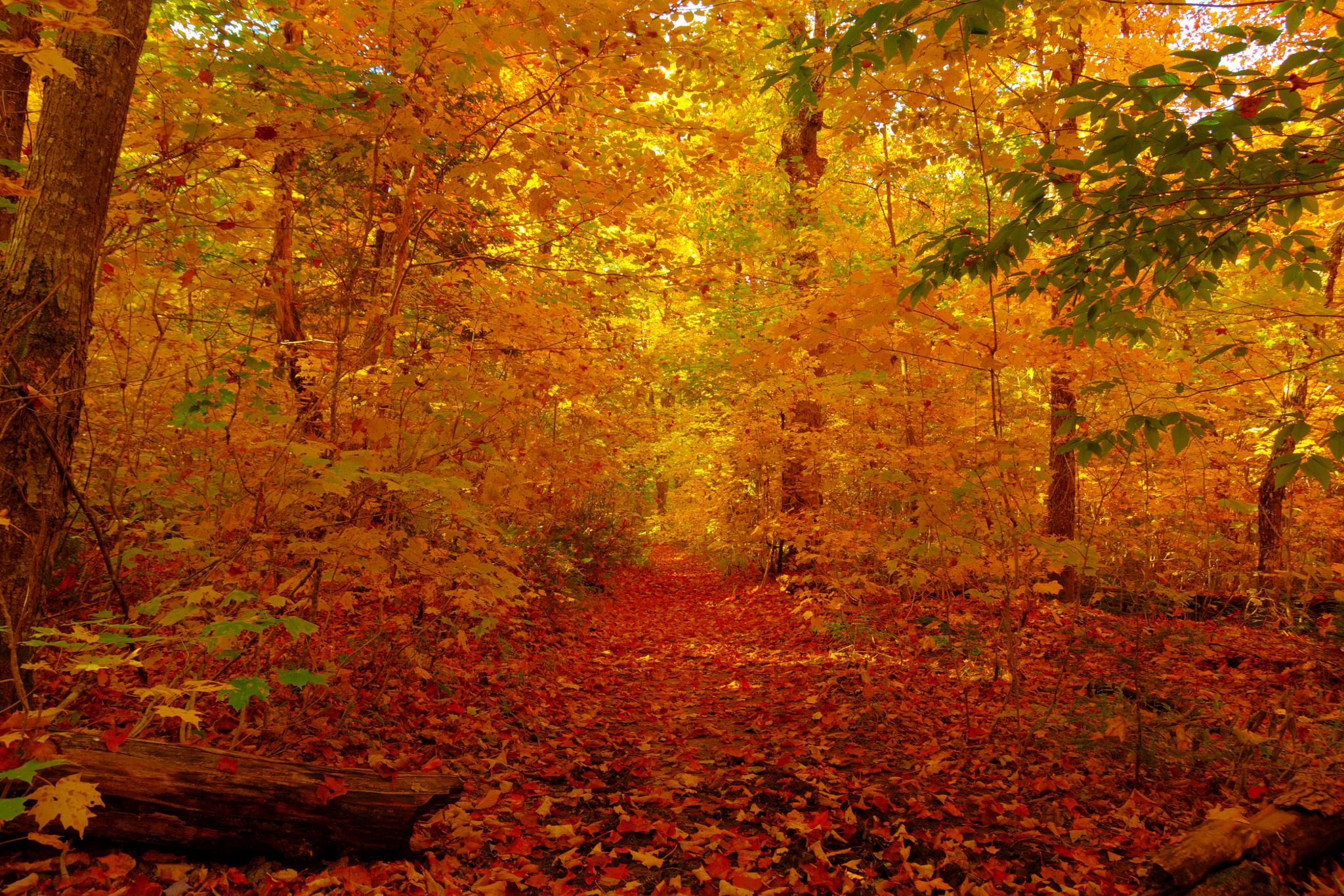 Carpet Of Leaves by Tim Corner