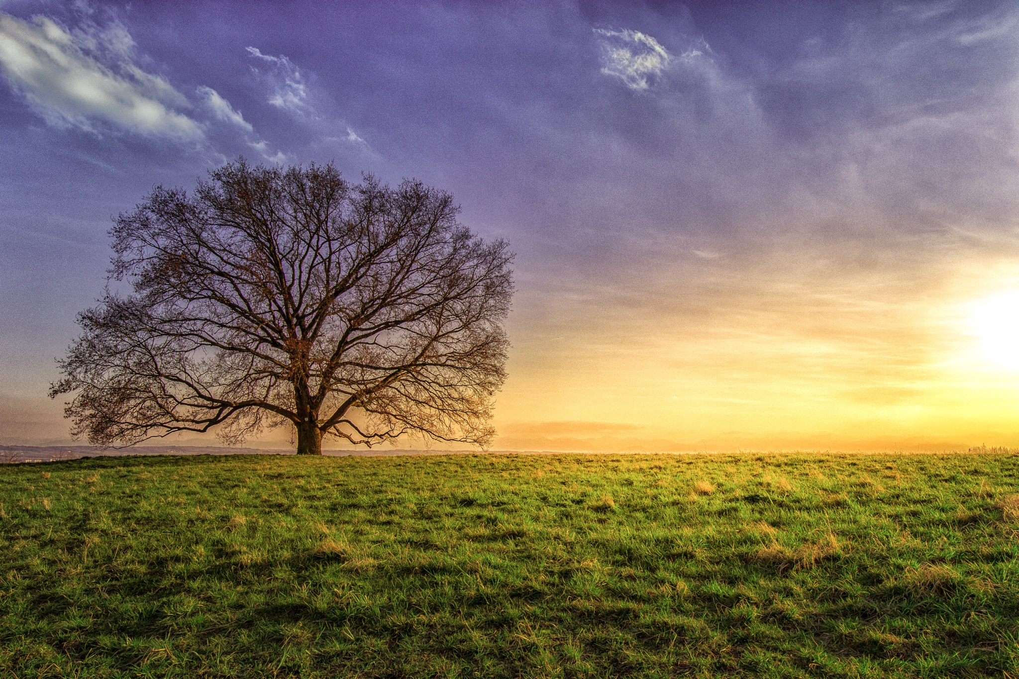The oak of Leonding: a natural monument by Matthias