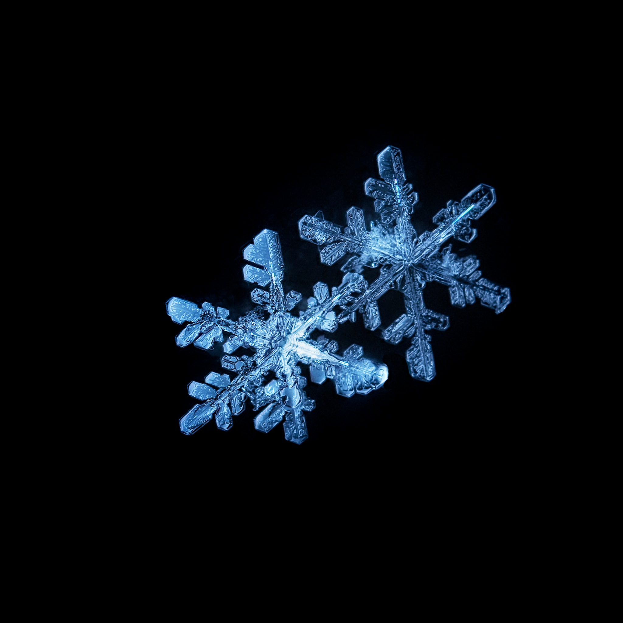 A Tale of Two Flakes by Dave Bremner