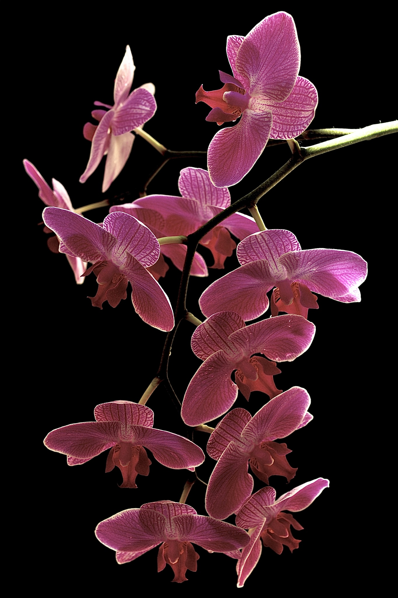 Orchids in Flight by Russ Duncan