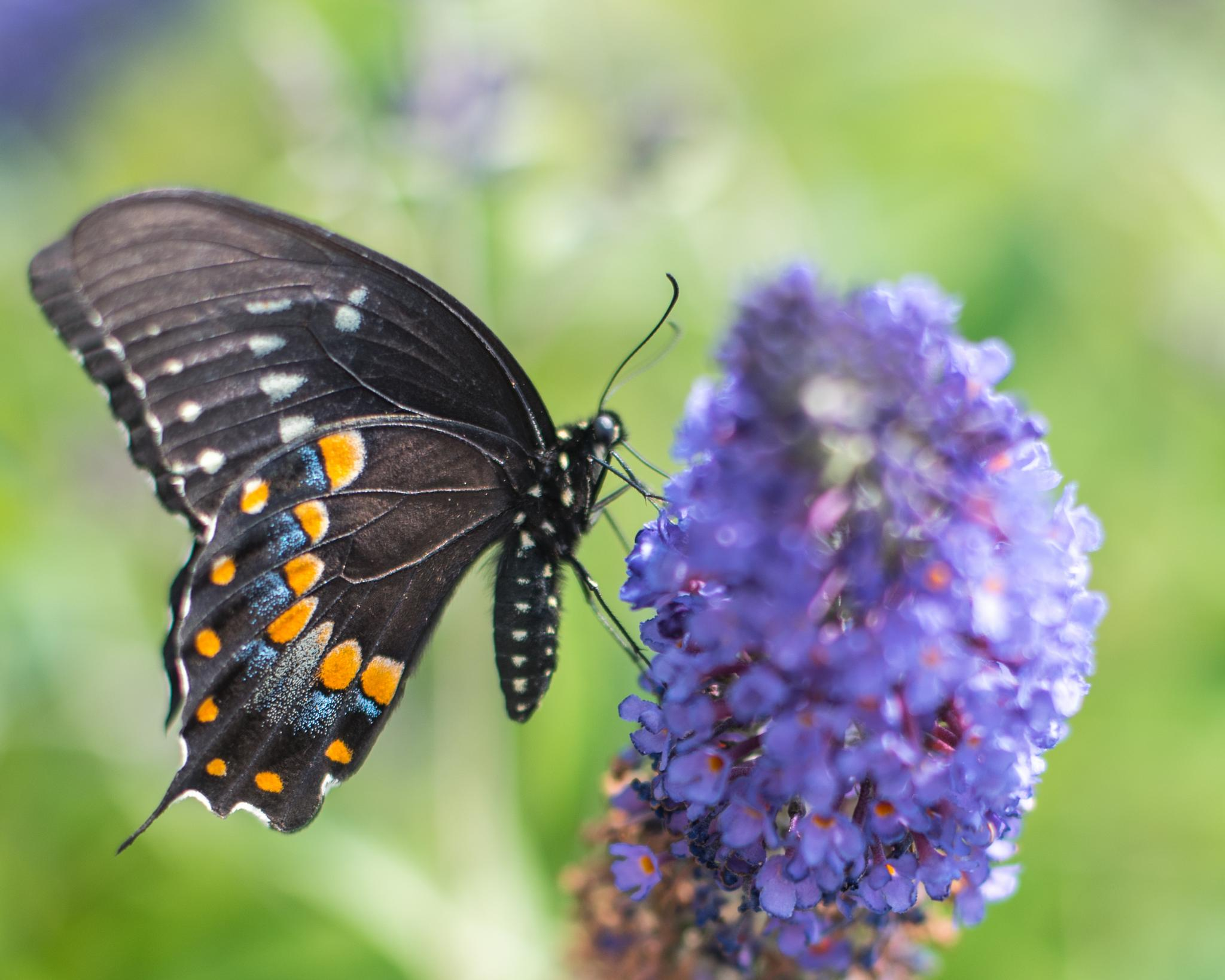Butterfly  by Michael Holl