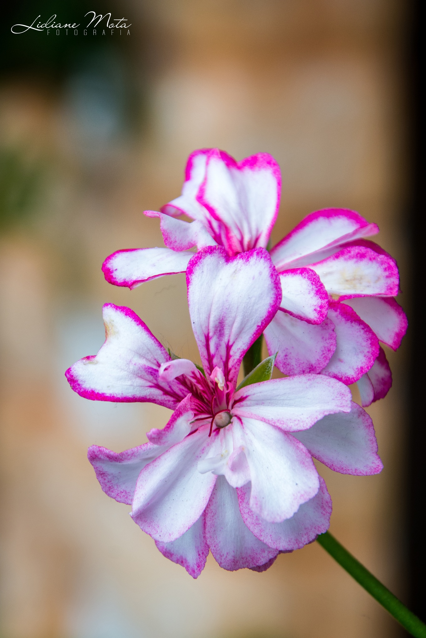 Flor delicada by LidianeMota