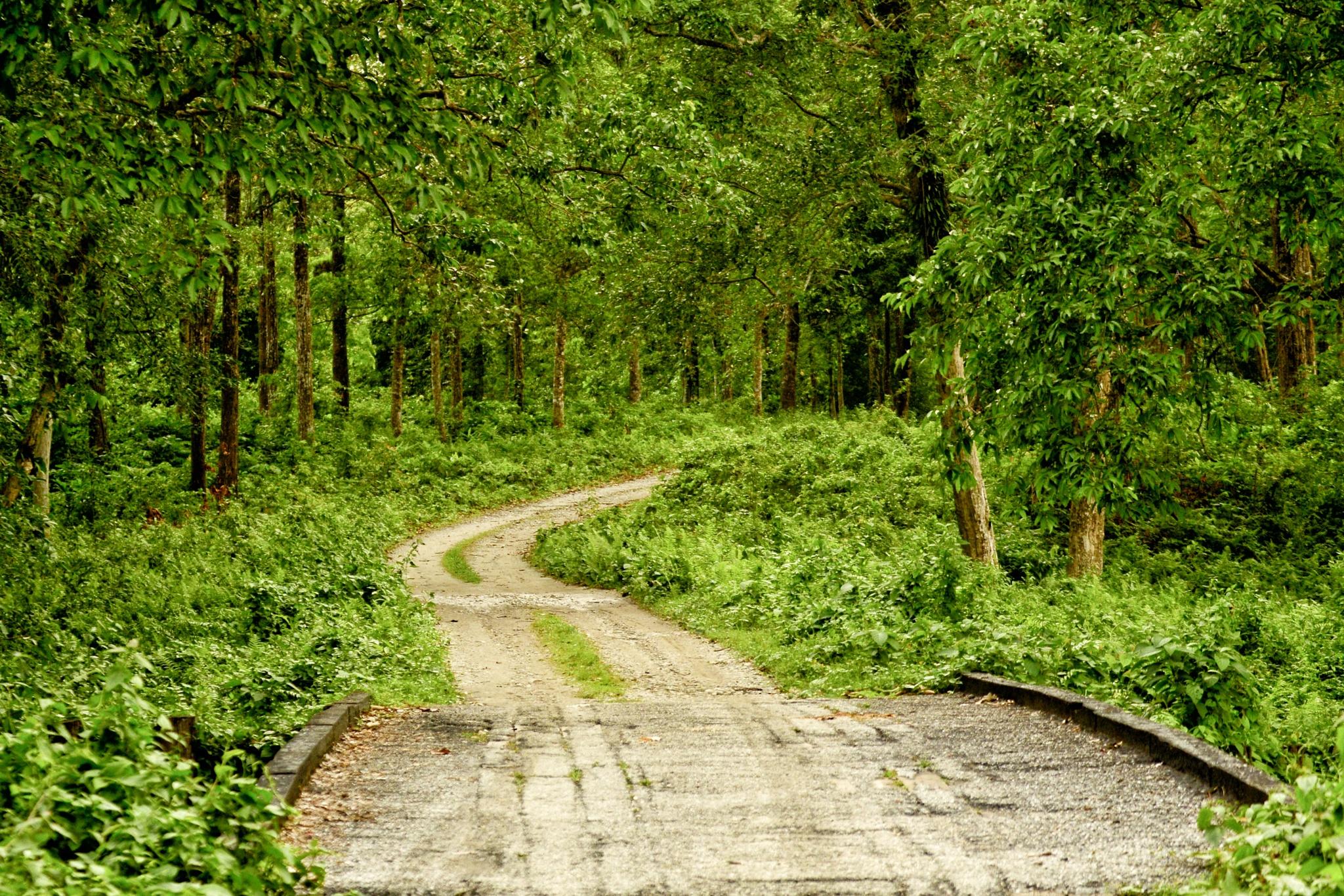 In the Woods by Deepayan Dey