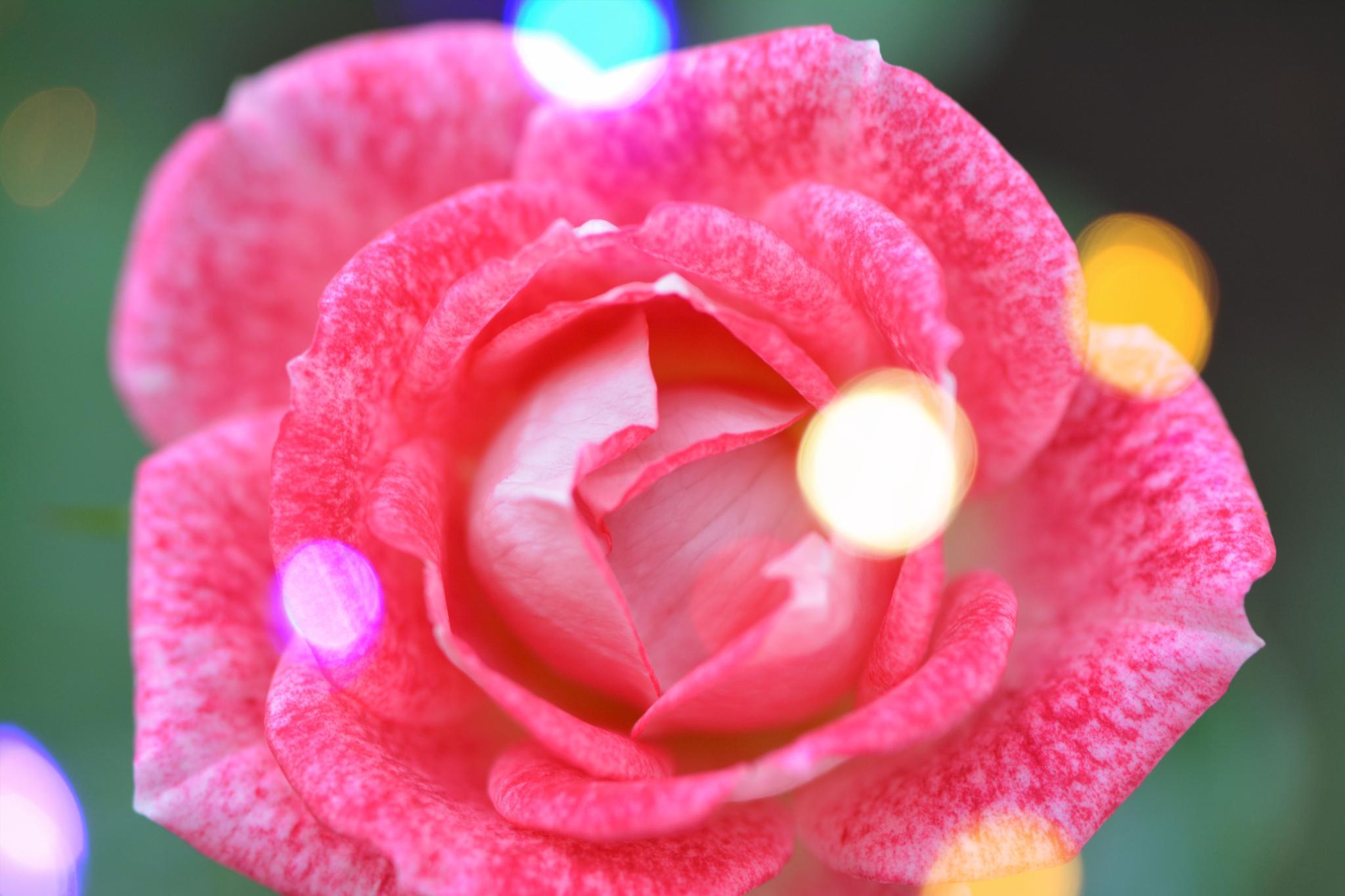 Rosee by ElcinYoldascan