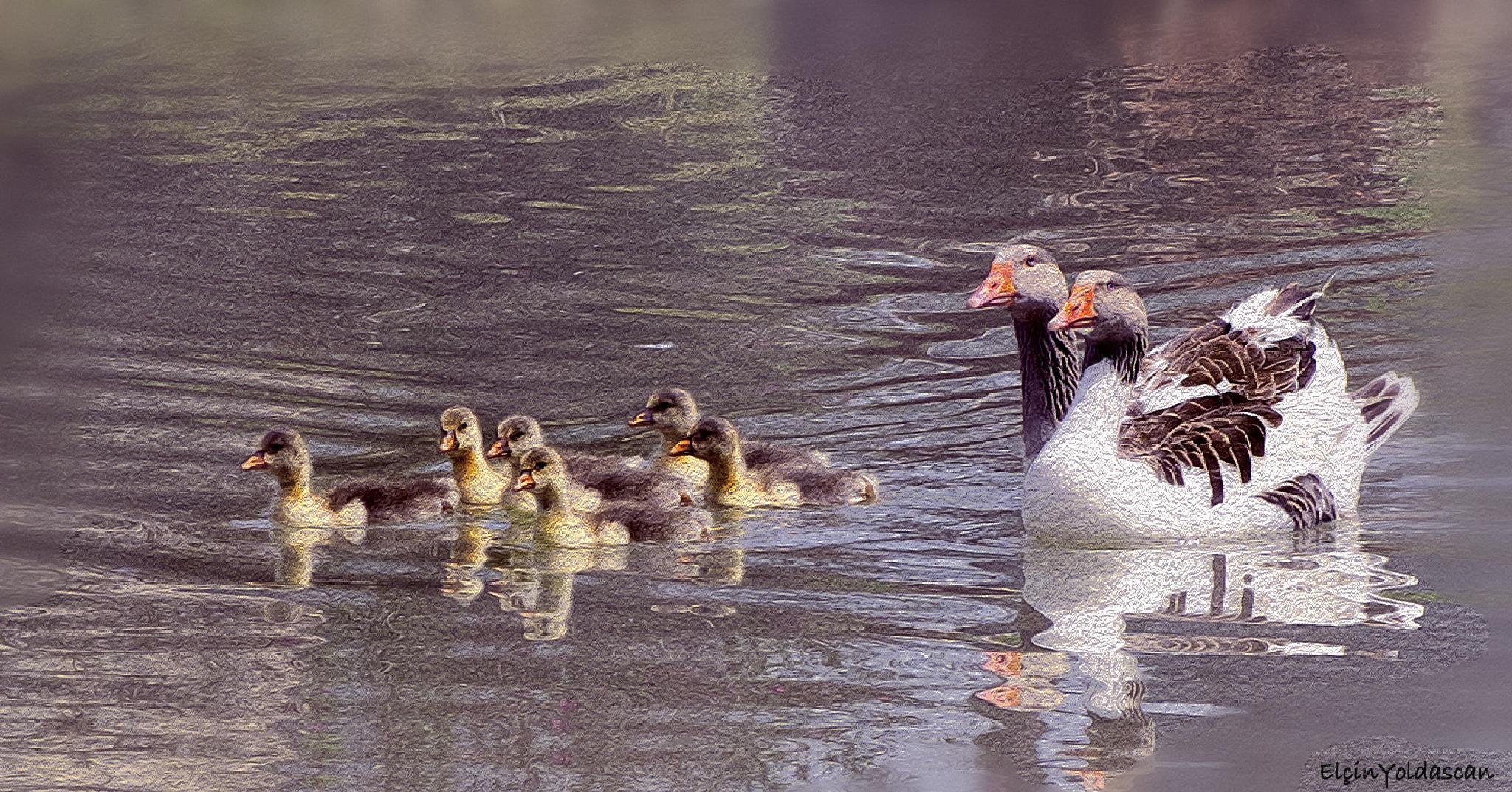 Duck Family by ElcinYoldascan