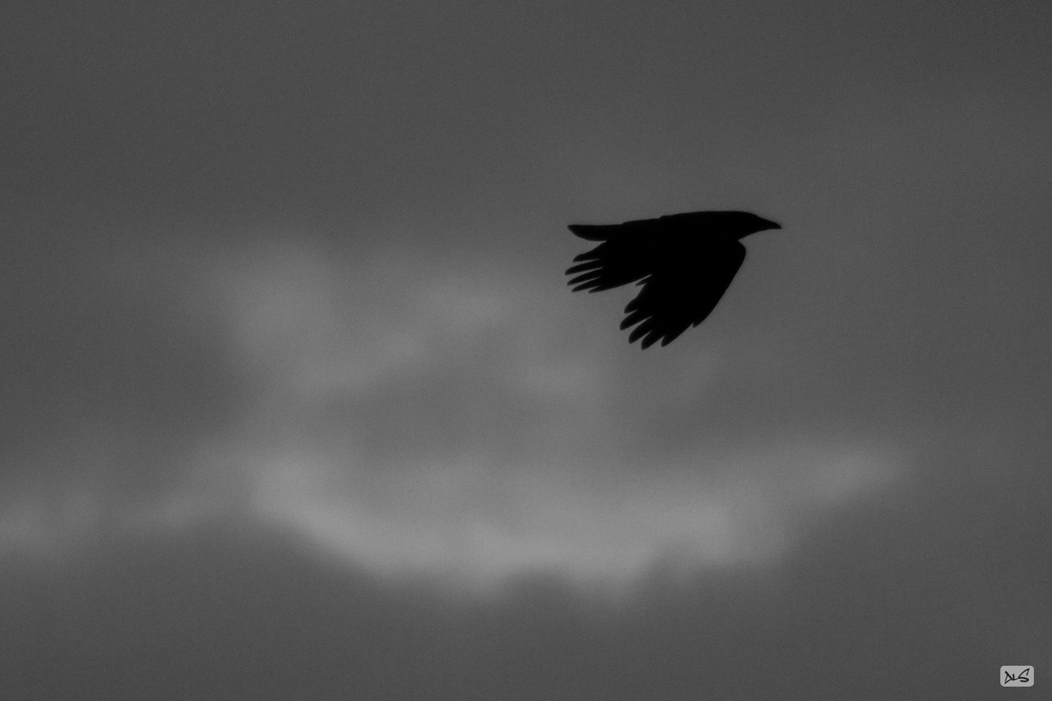 The crow. by Alexander Schlotter