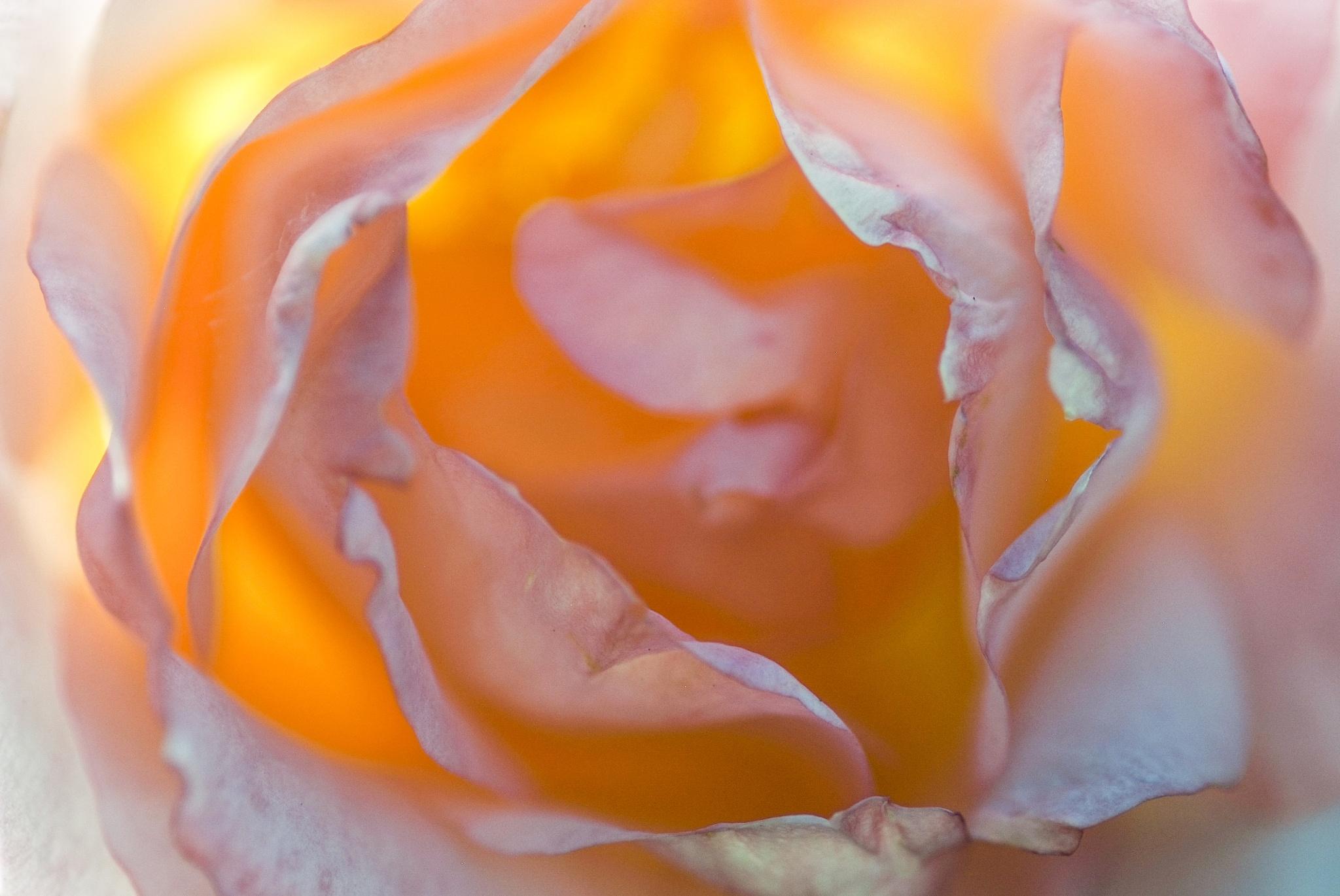 sunburst by sonny_roger_sonneland