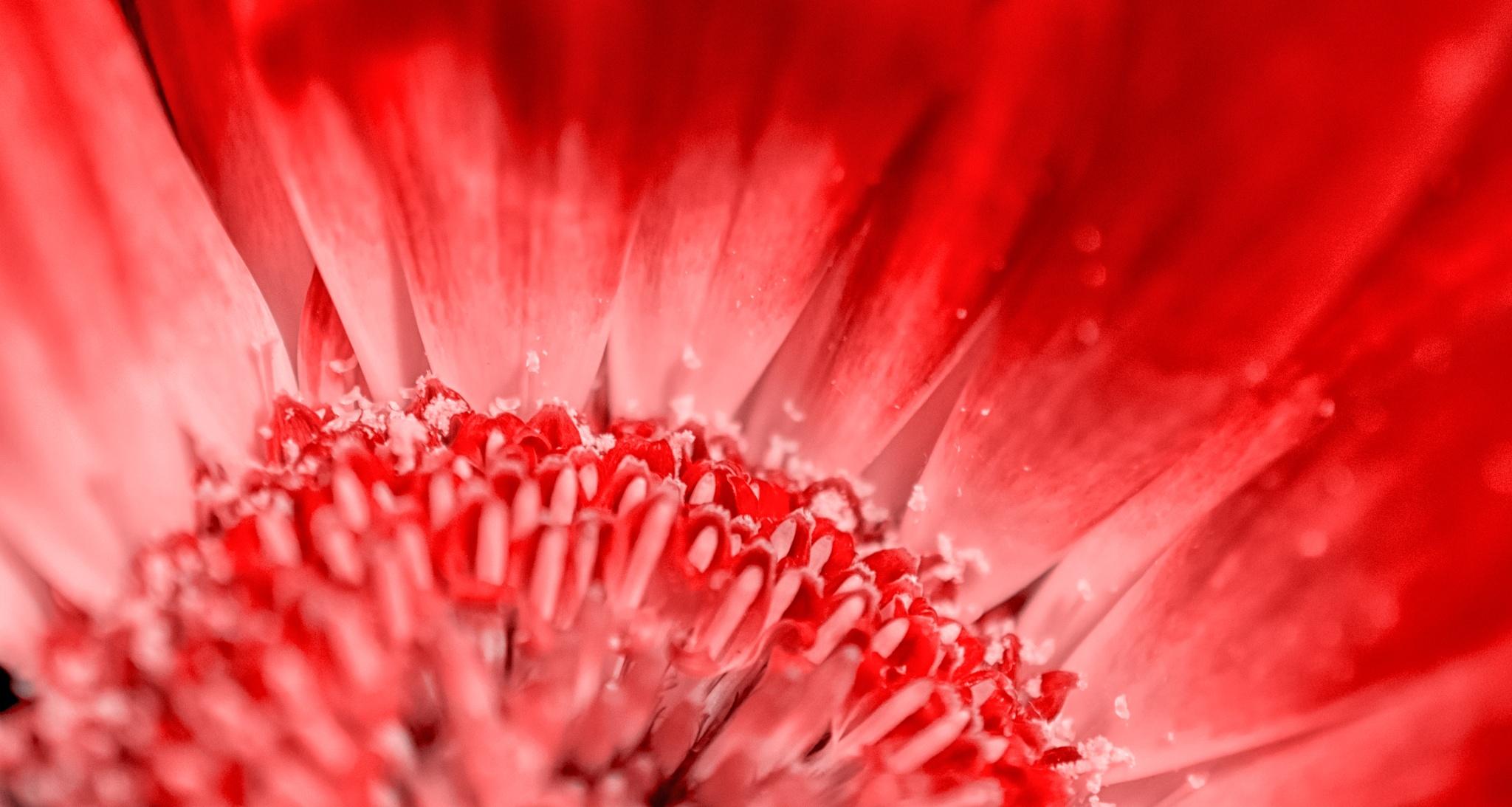 Nothing But Flowers by Tashina van Zwam