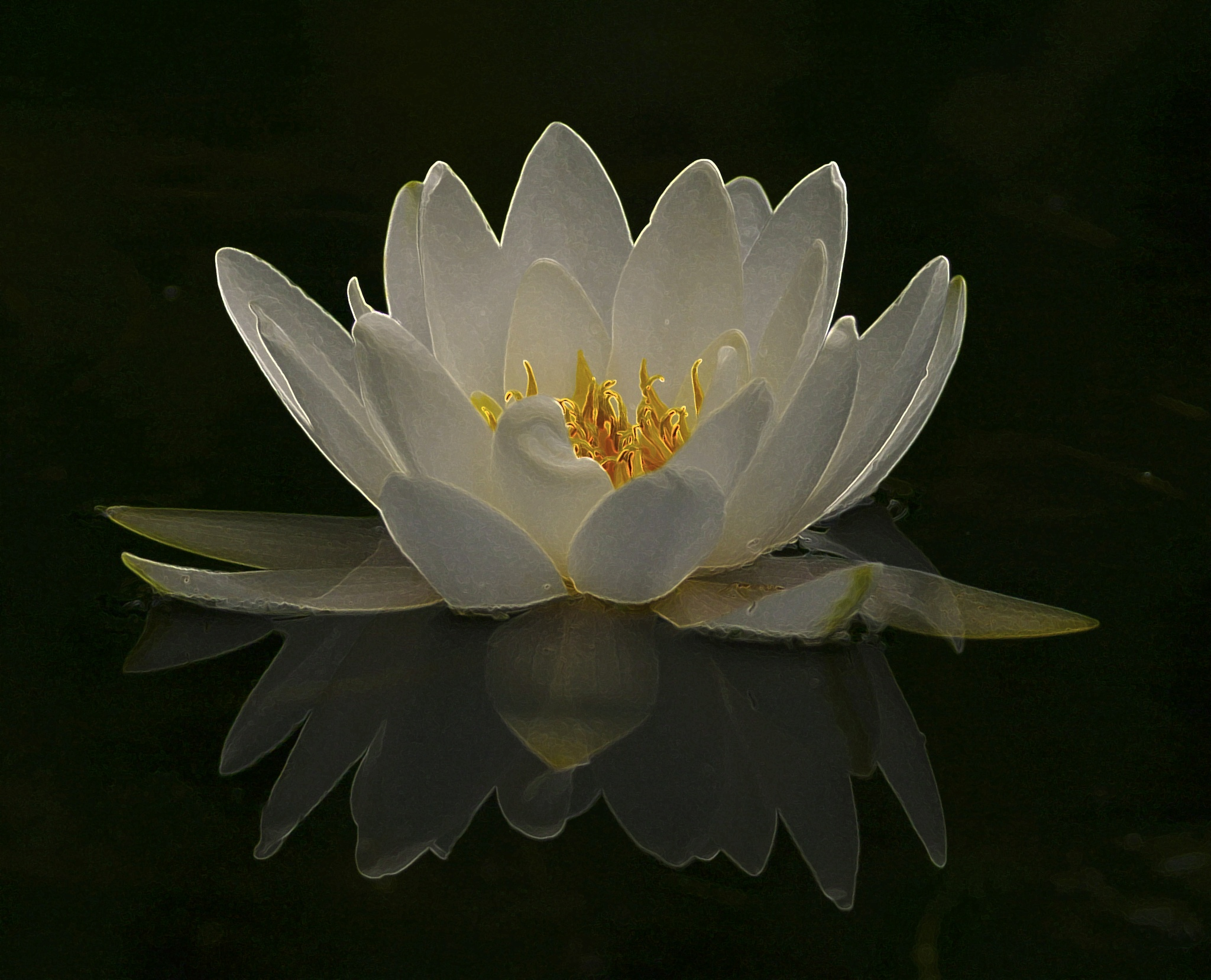 Waterlily by Hannie vd