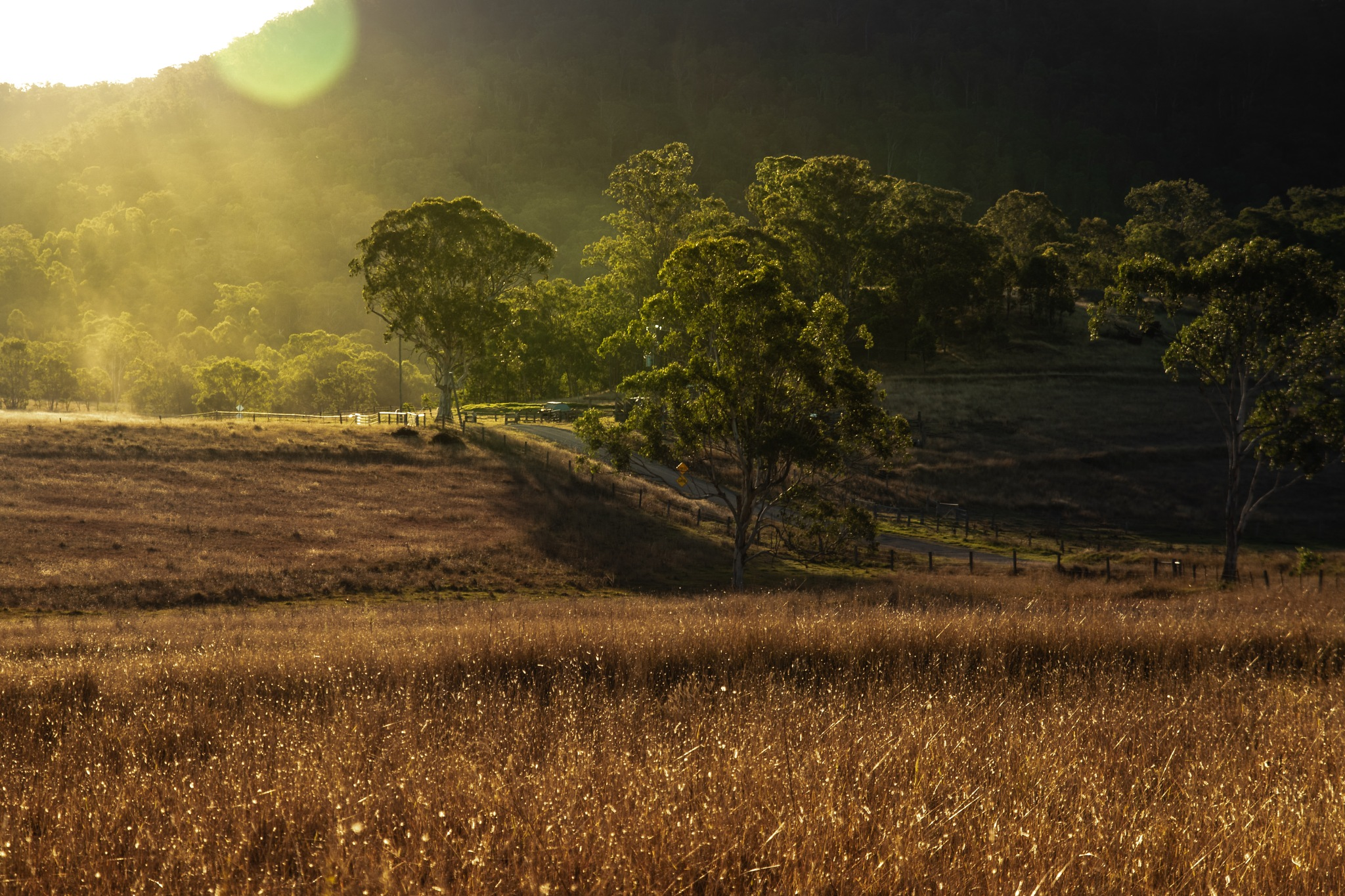 fieldsOfGold by Max Evans