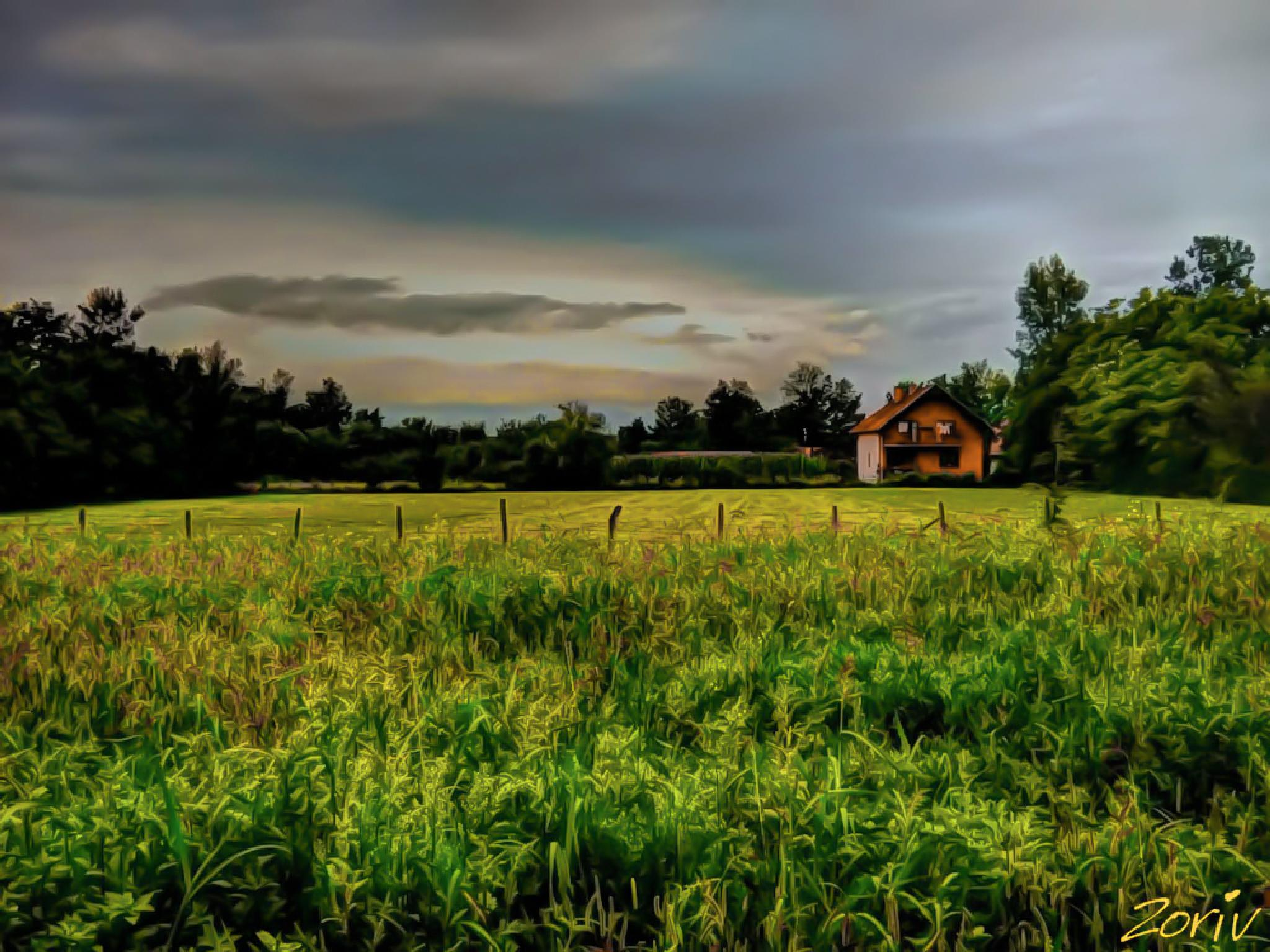 Country side - Before summer night to fall by zoriv