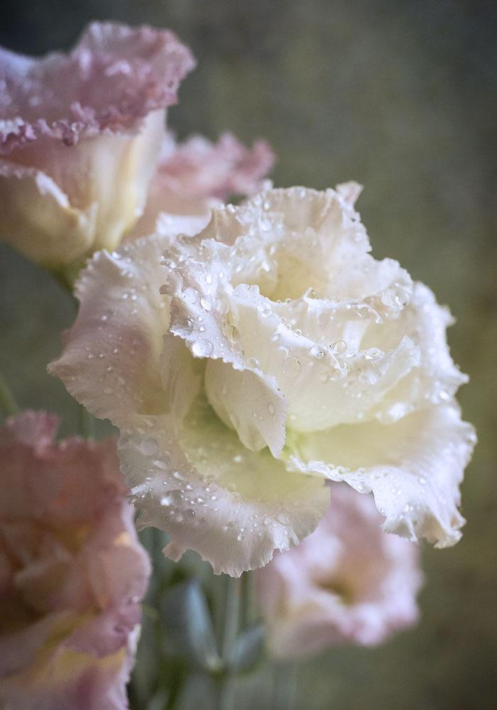 The roses by Igor Tokarev