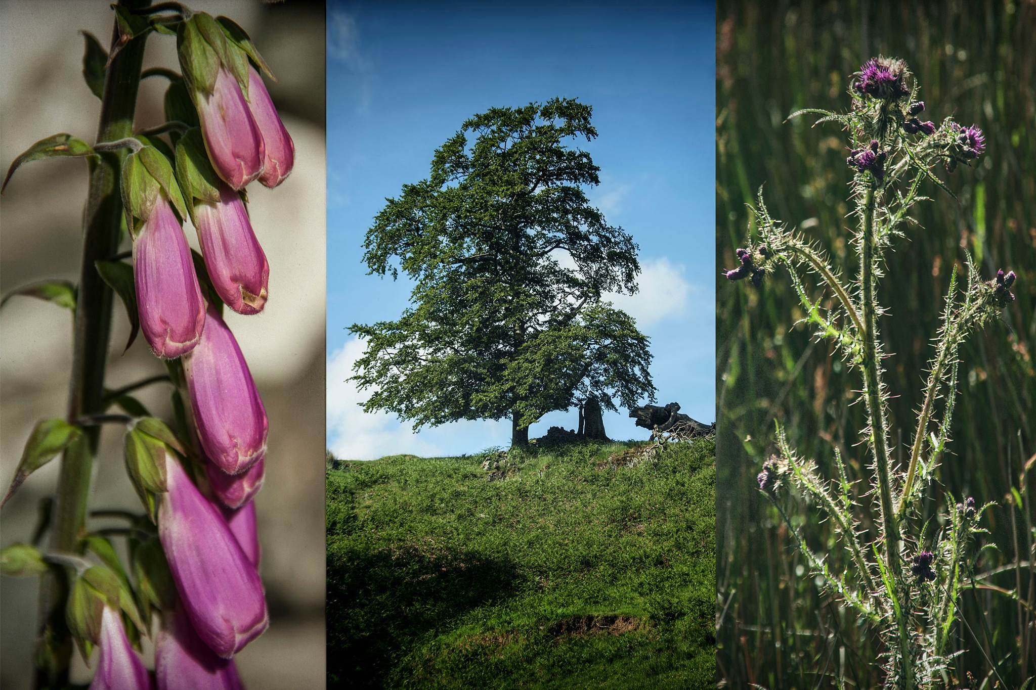 Cumbrian Tryptic by Willpower