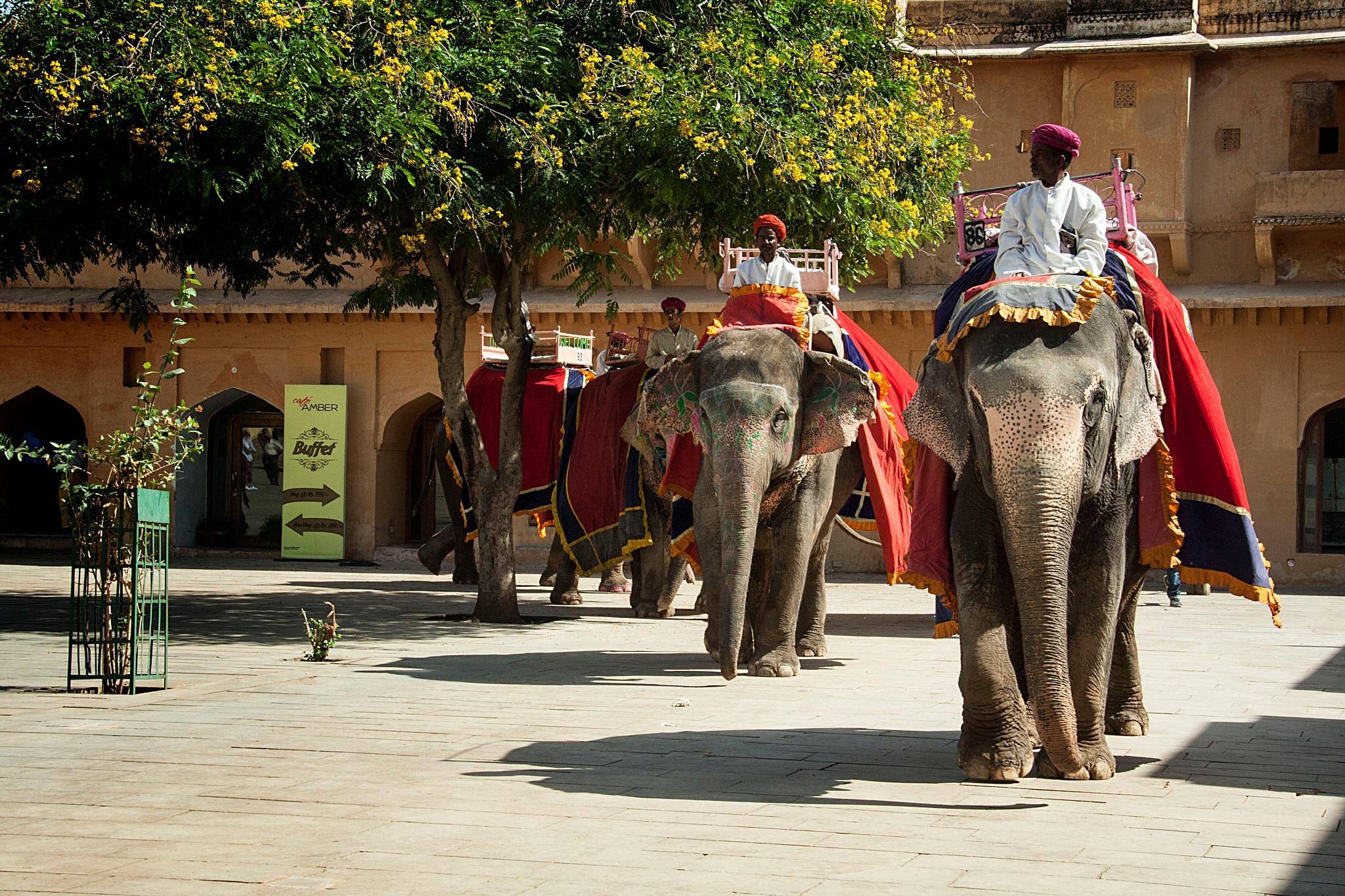Licensed Elephants by Willpower