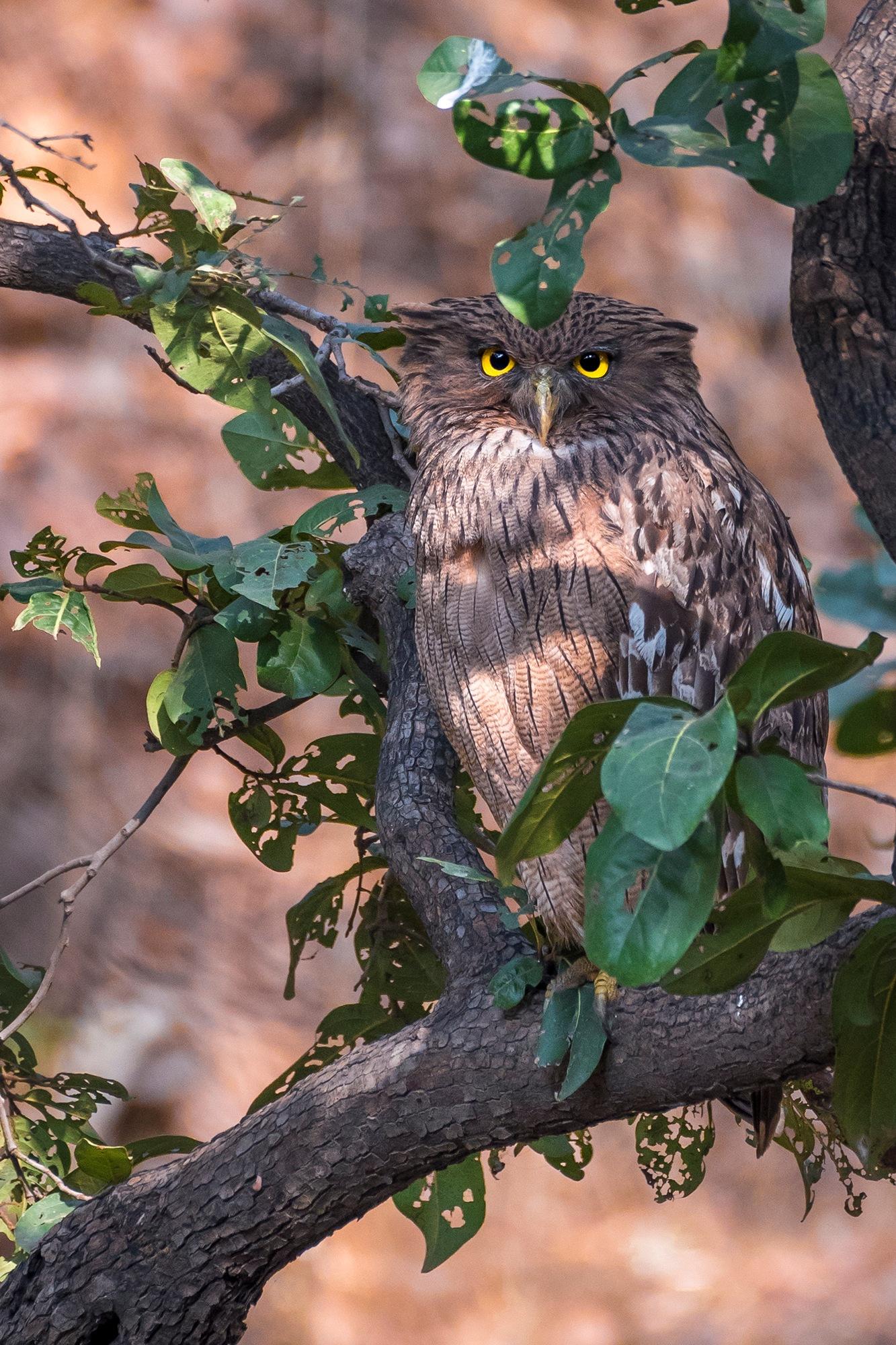 I see you by Srikrishna Das