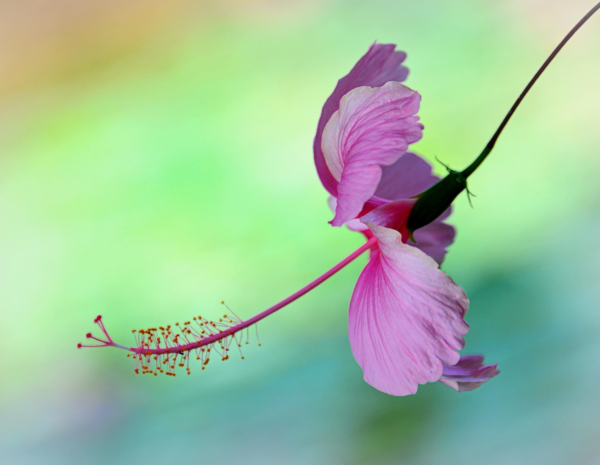 Whispering Air by Brian Mei