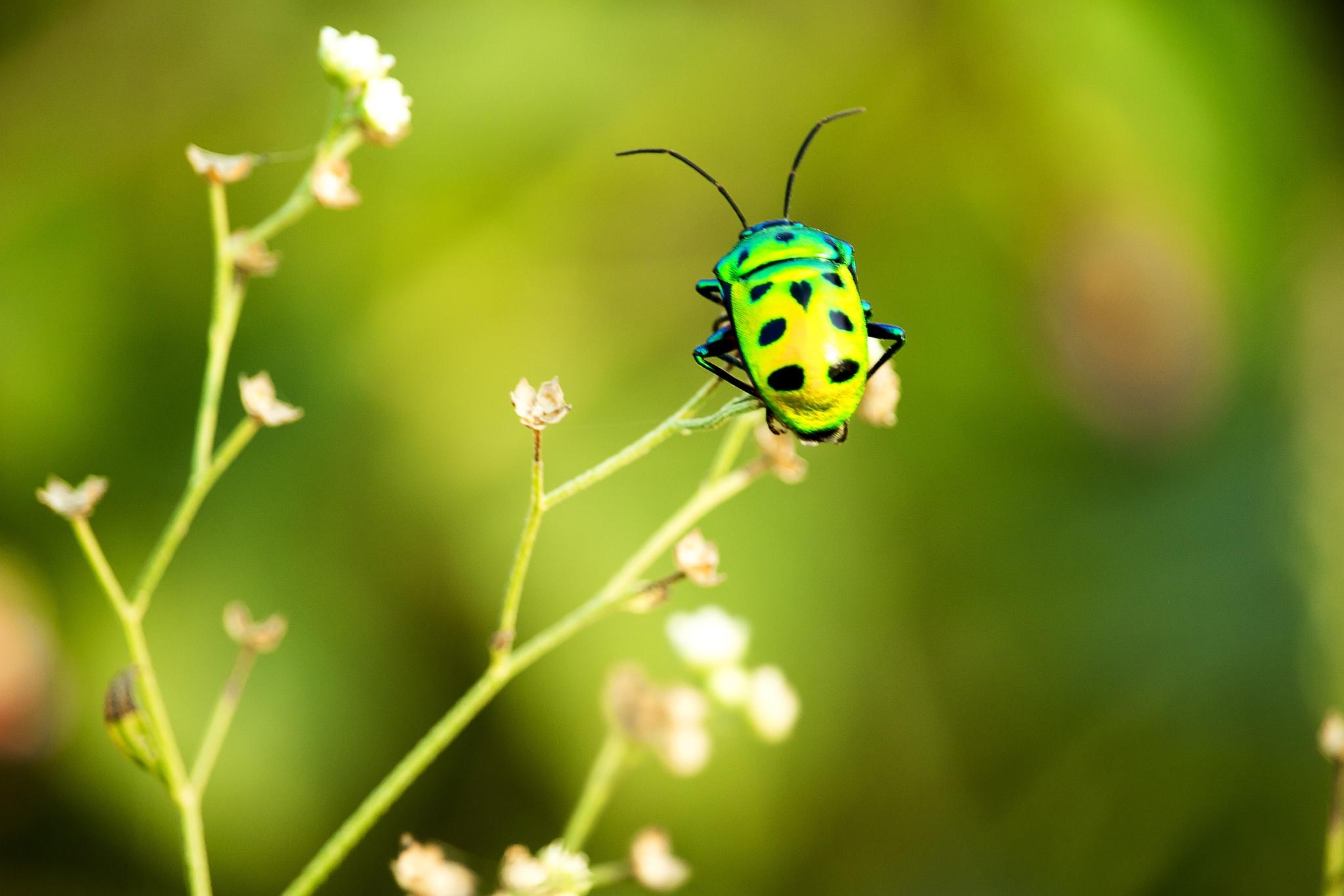 Beautiful Bug by Lokesh Pamarthi