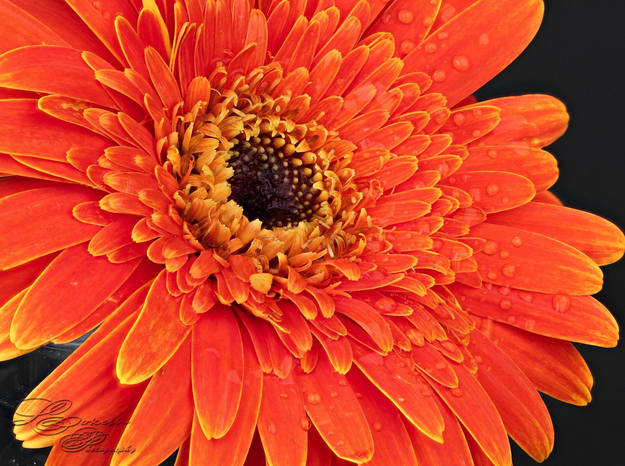 Facial of flower  by Lokesh Pamarthi