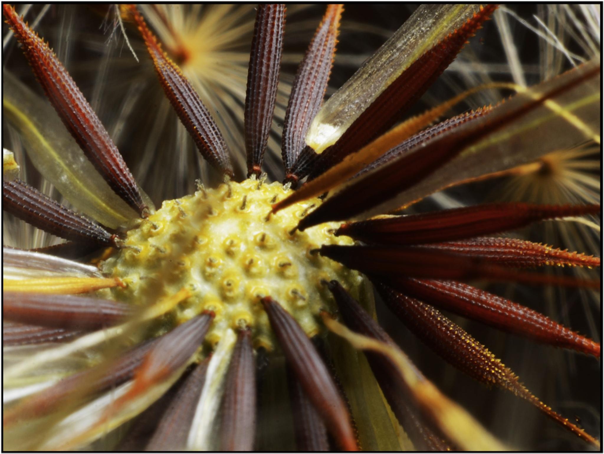 Seeds by Bertie Price