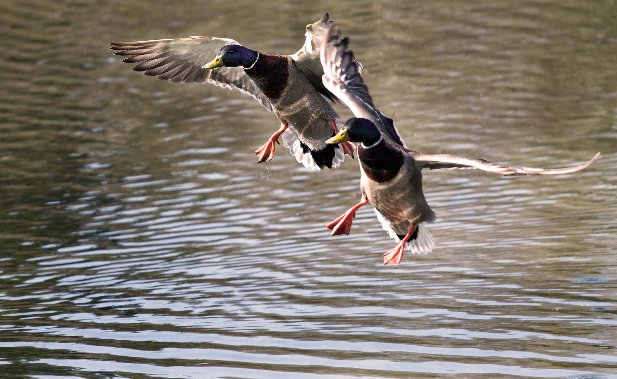 Dual Landing by Richard Lynam