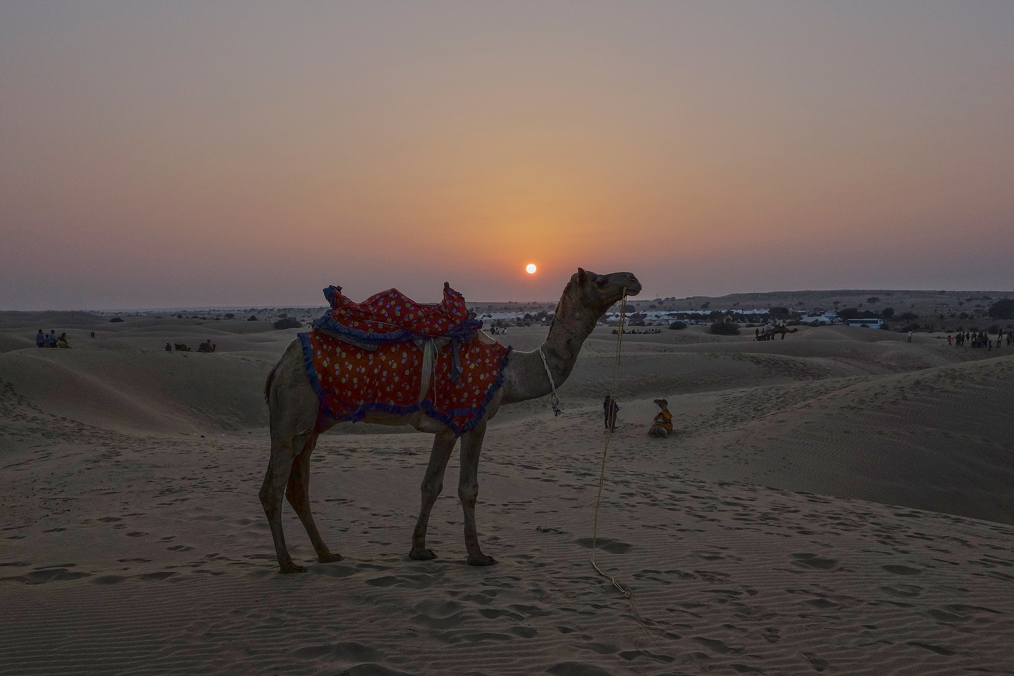 camel and sunset by Markus Scholz