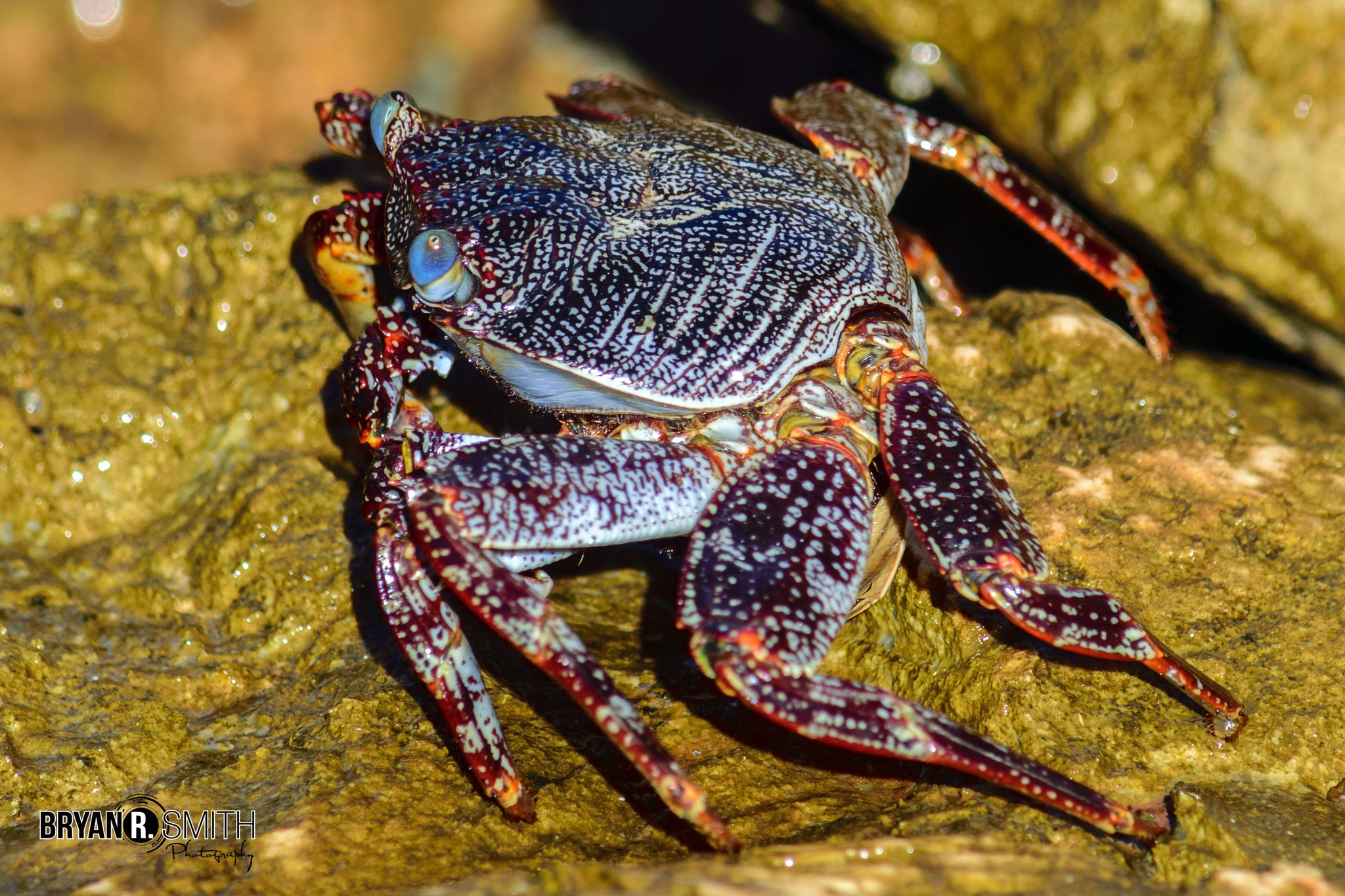 Mr Crab by brsphotography876