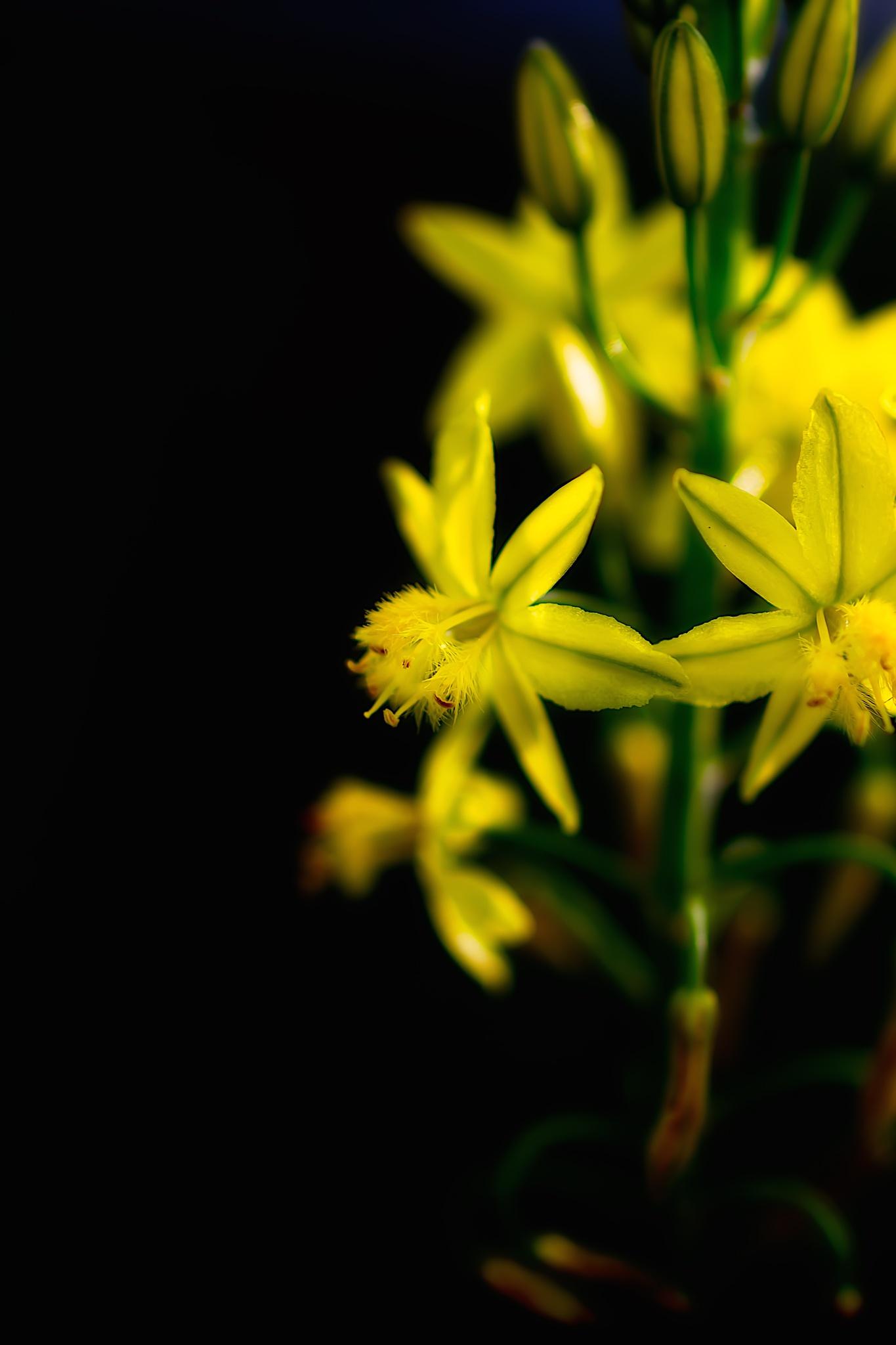 yellow by Nestor Arrieta