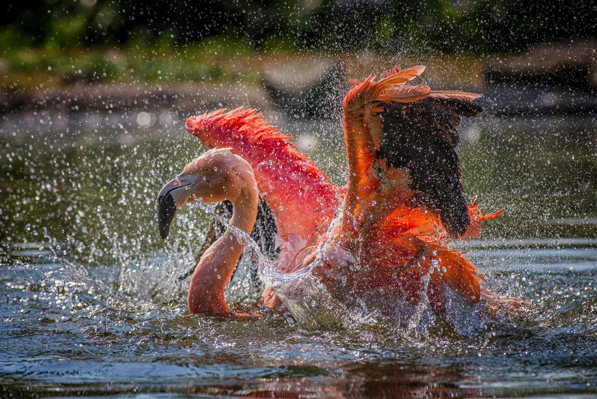 Another splashing Picture by Friedhelm Peters