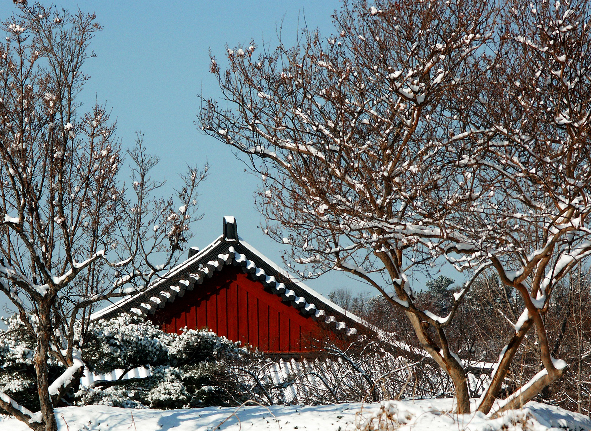A Snowy Day in Korea by Steve Garrigues