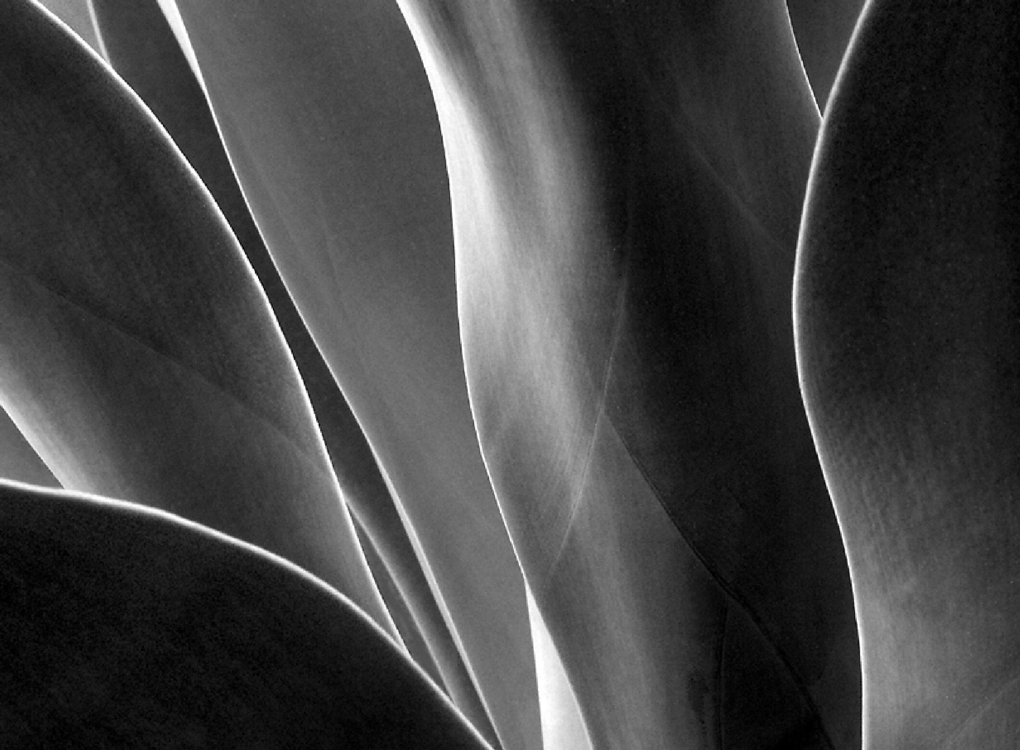 Lines by Steve Garrigues