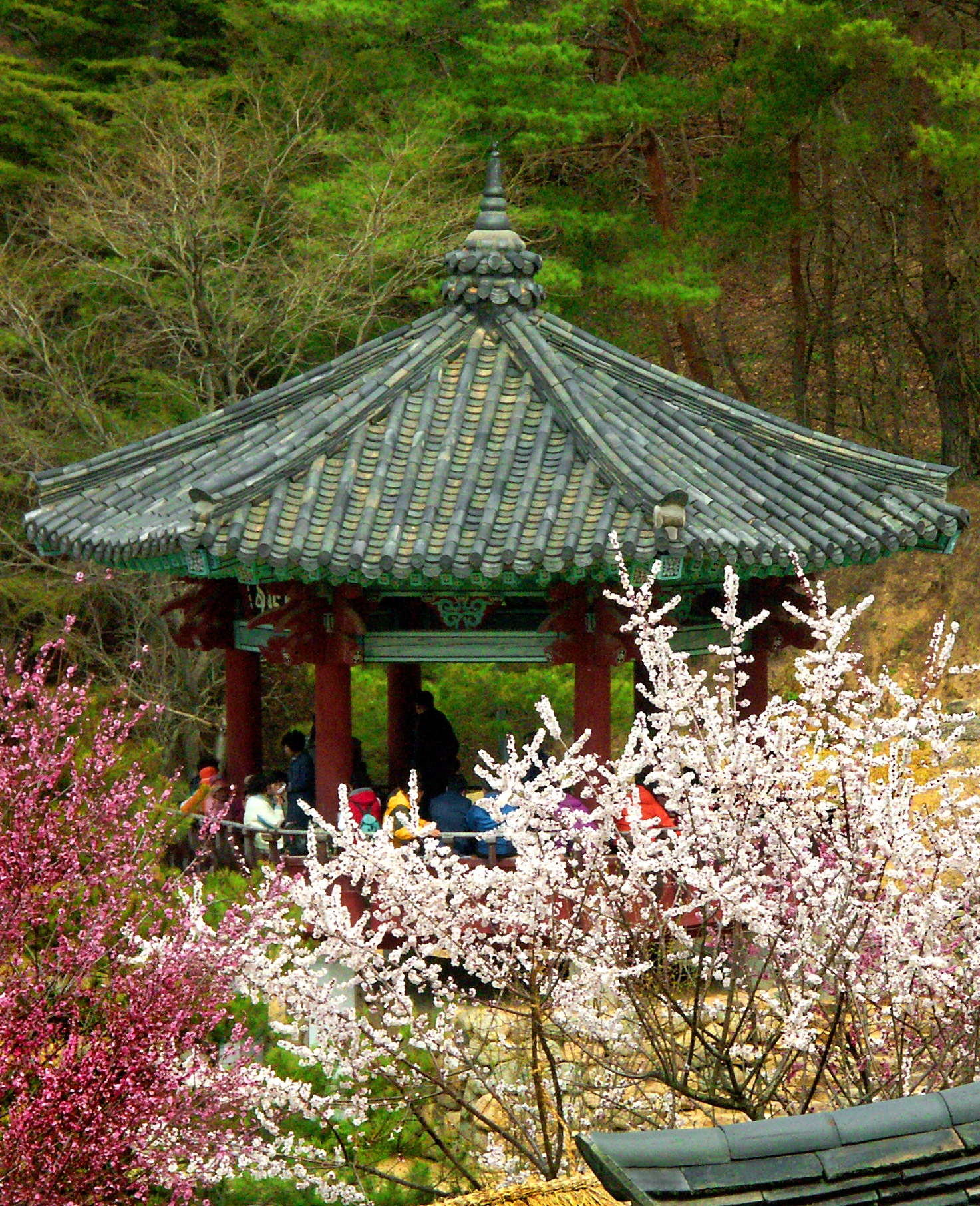 A Pavilion in the Spring by Steve Garrigues
